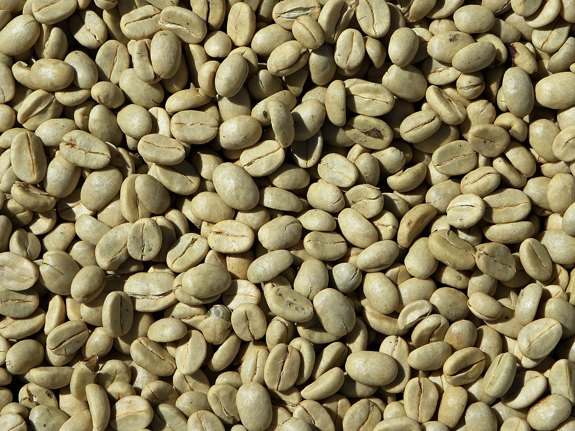 Will Green Coffee Beans Help With Weight Loss Rationable