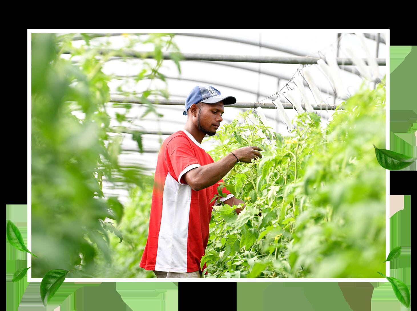 Pionnière dans la production de légumes sous abris à La Réunion - Sandy a développé au fil des années un cahier des charges, un savoir-faire et une expertise reconnus. Résultat ? Des produits bons et sains adaptés aux attentes de Réunionnais de plus en plus soucieux de leur alimentation, du respect de leur terroir et de leur environnement.