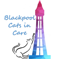 Blackpool Cats in Care 2[9833].png