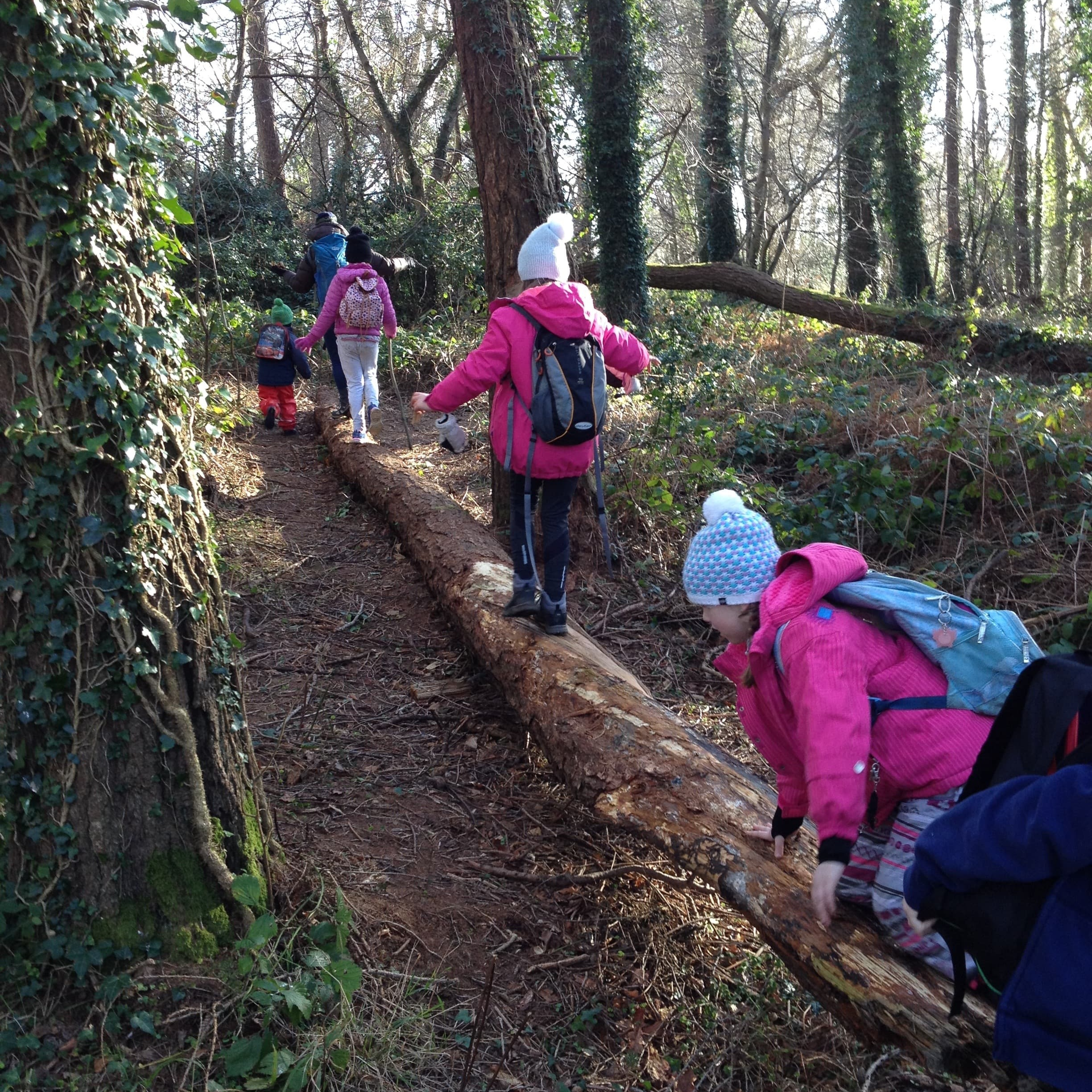 Explore The Forest - Discover and explore the forest on a different nature trail each day en-route to base camp learning about different trees, plants, animals and how to spot them.
