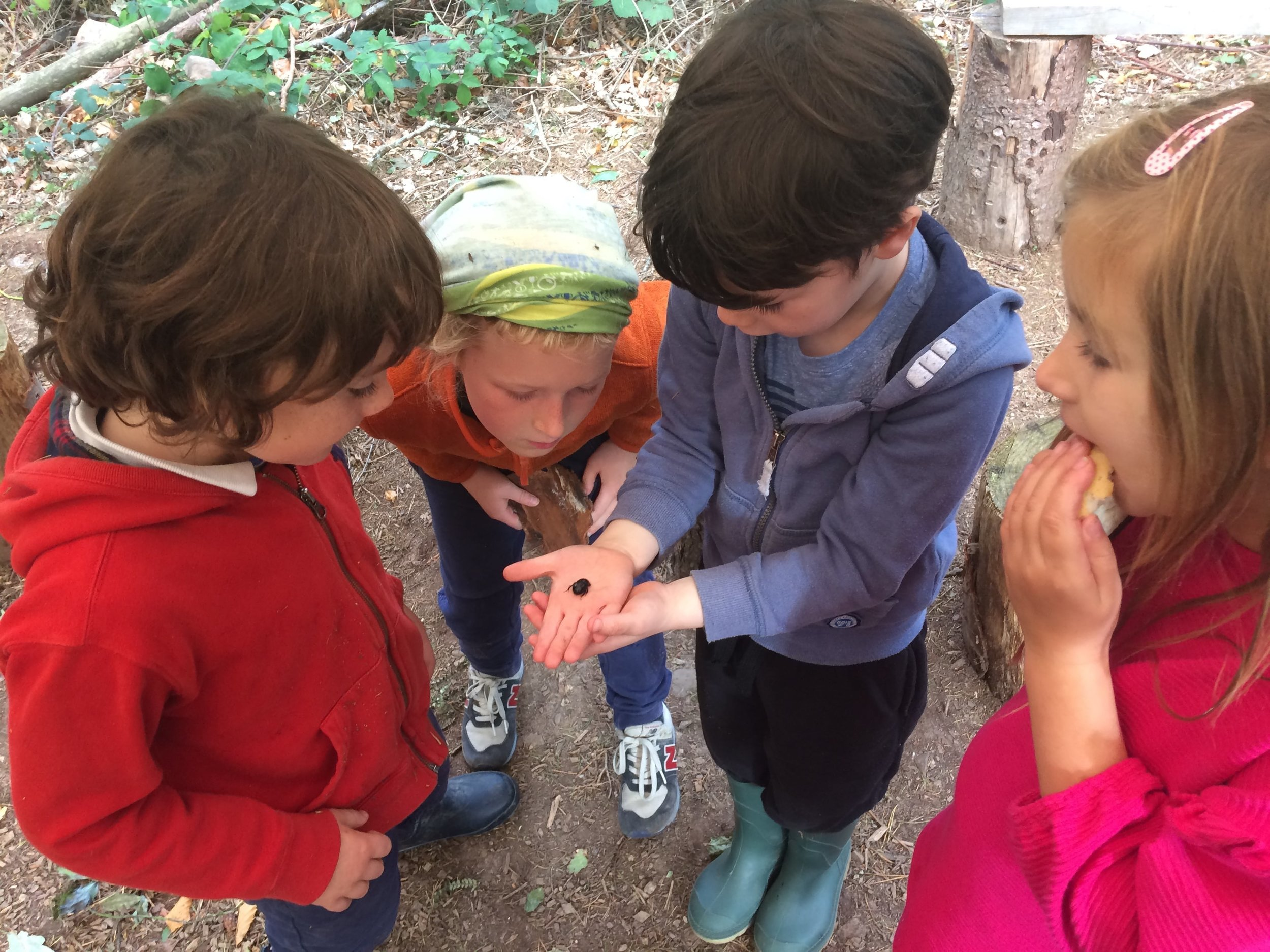 Activities page the exploration and discovery of nature-min.jpg