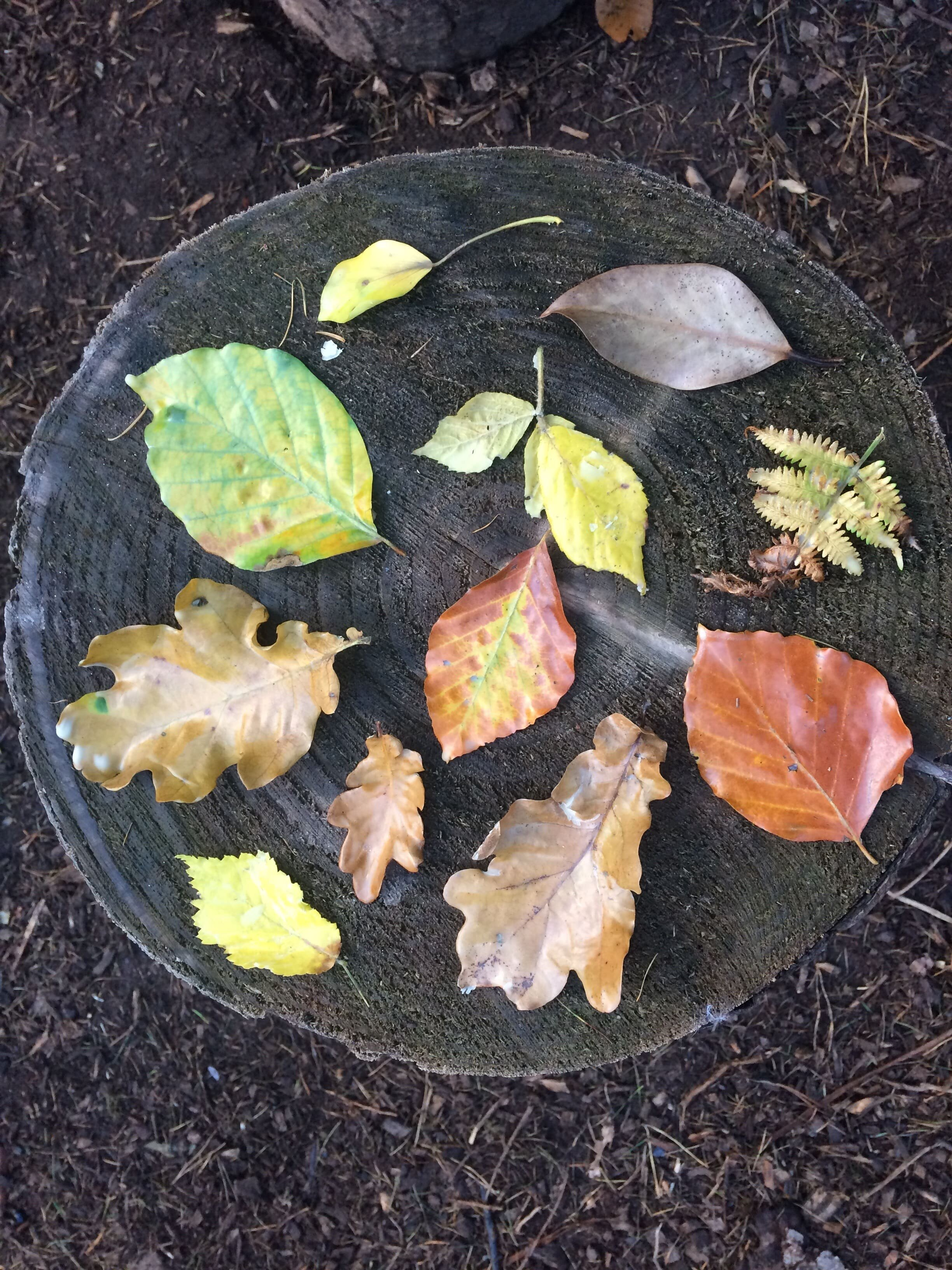 Miscellanous photos- preserving the colours of Autumn , leaves dipped in natural beeswax-min.jpg