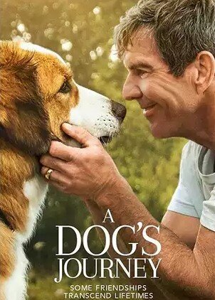 a dogs journe y.jpg