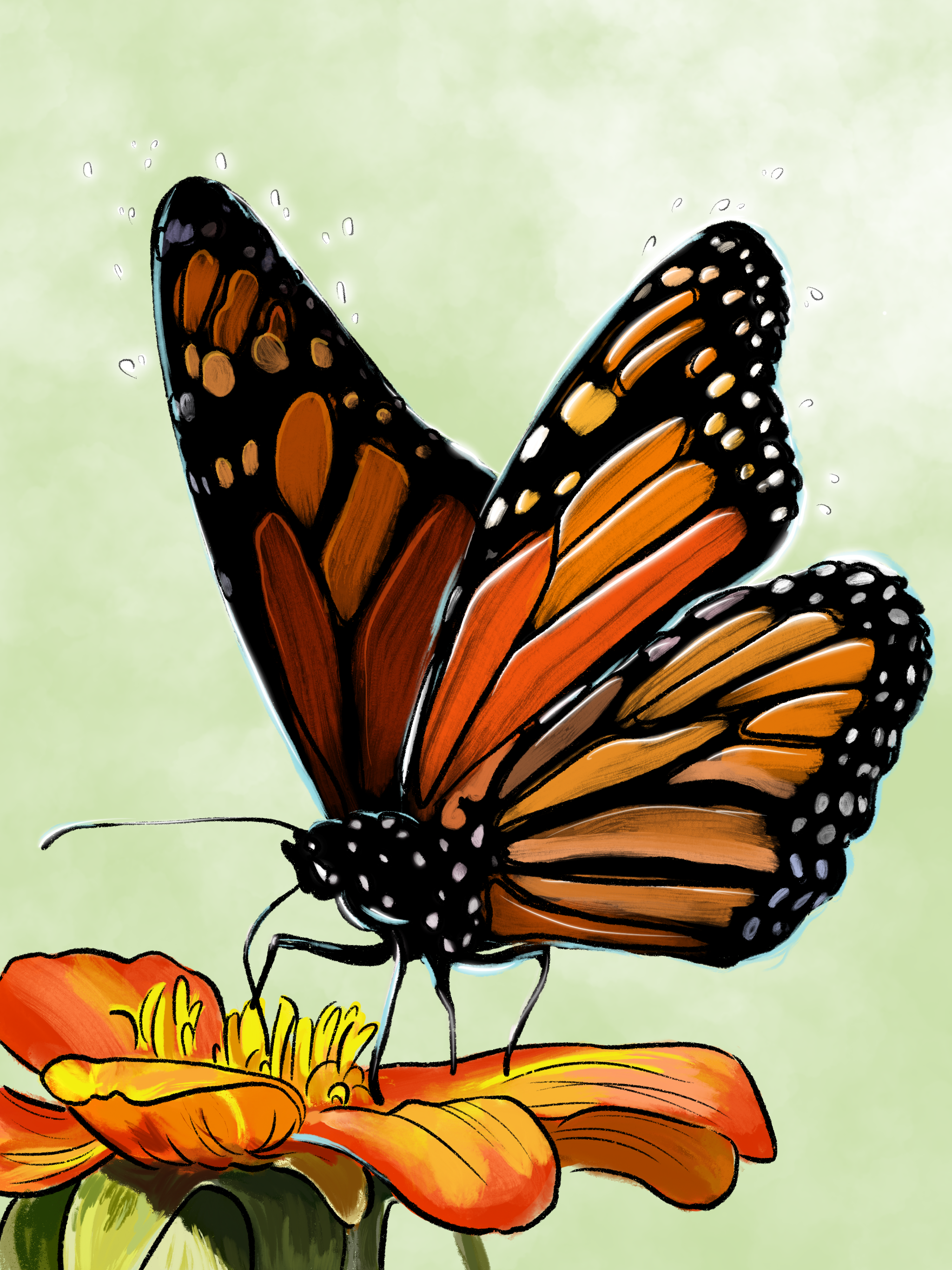 untitled (monarca)