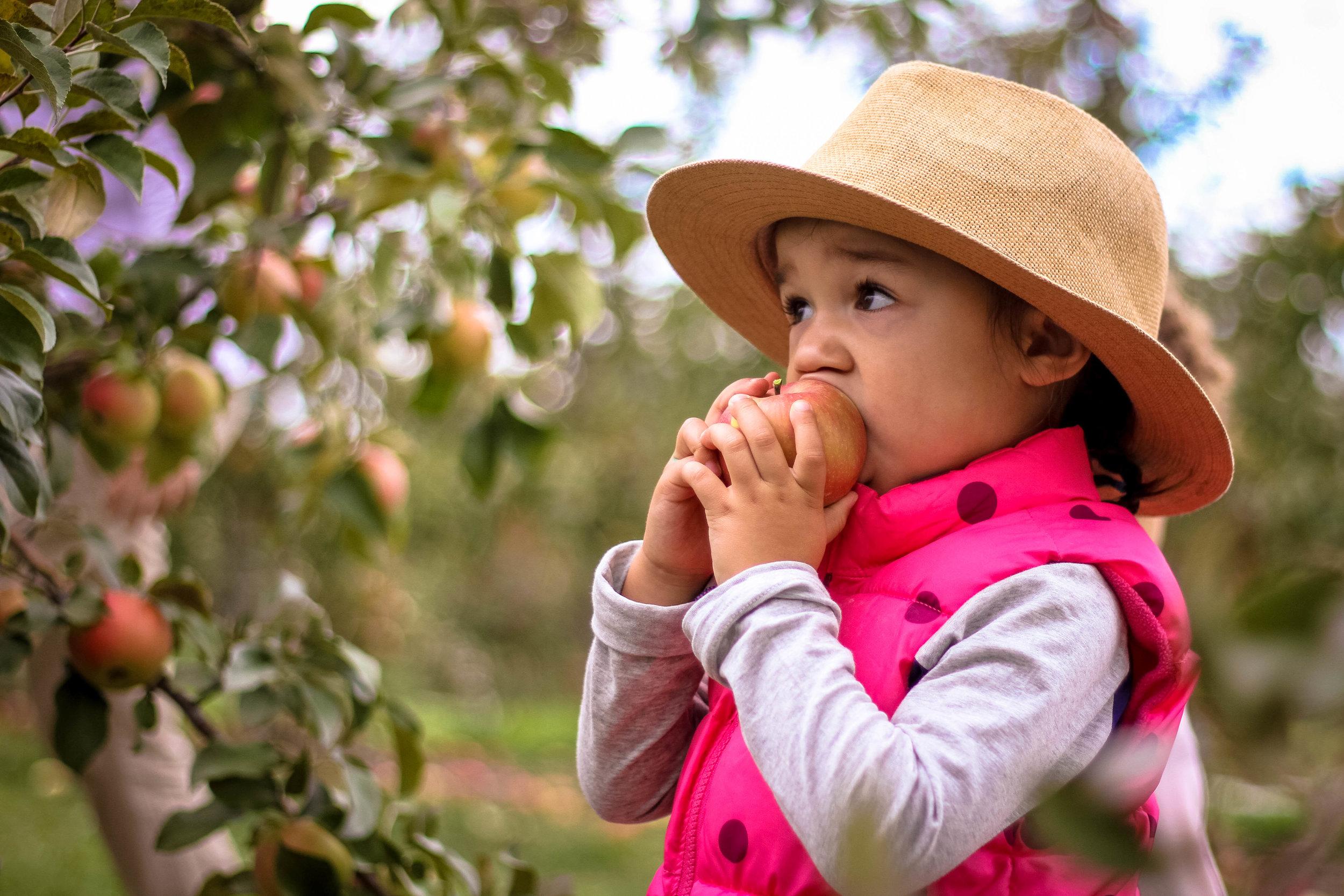 Apple Picking - 002.jpg