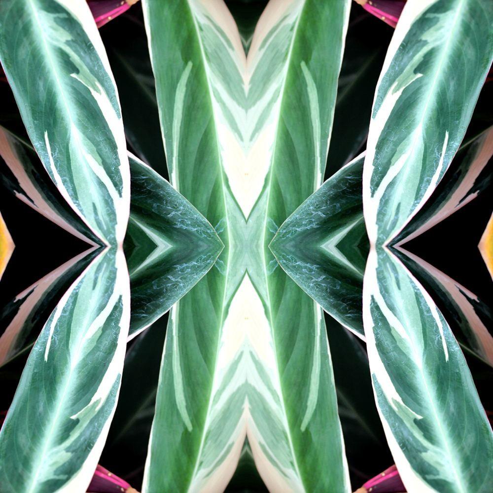 Iona Crawford Tropics Wallpaper