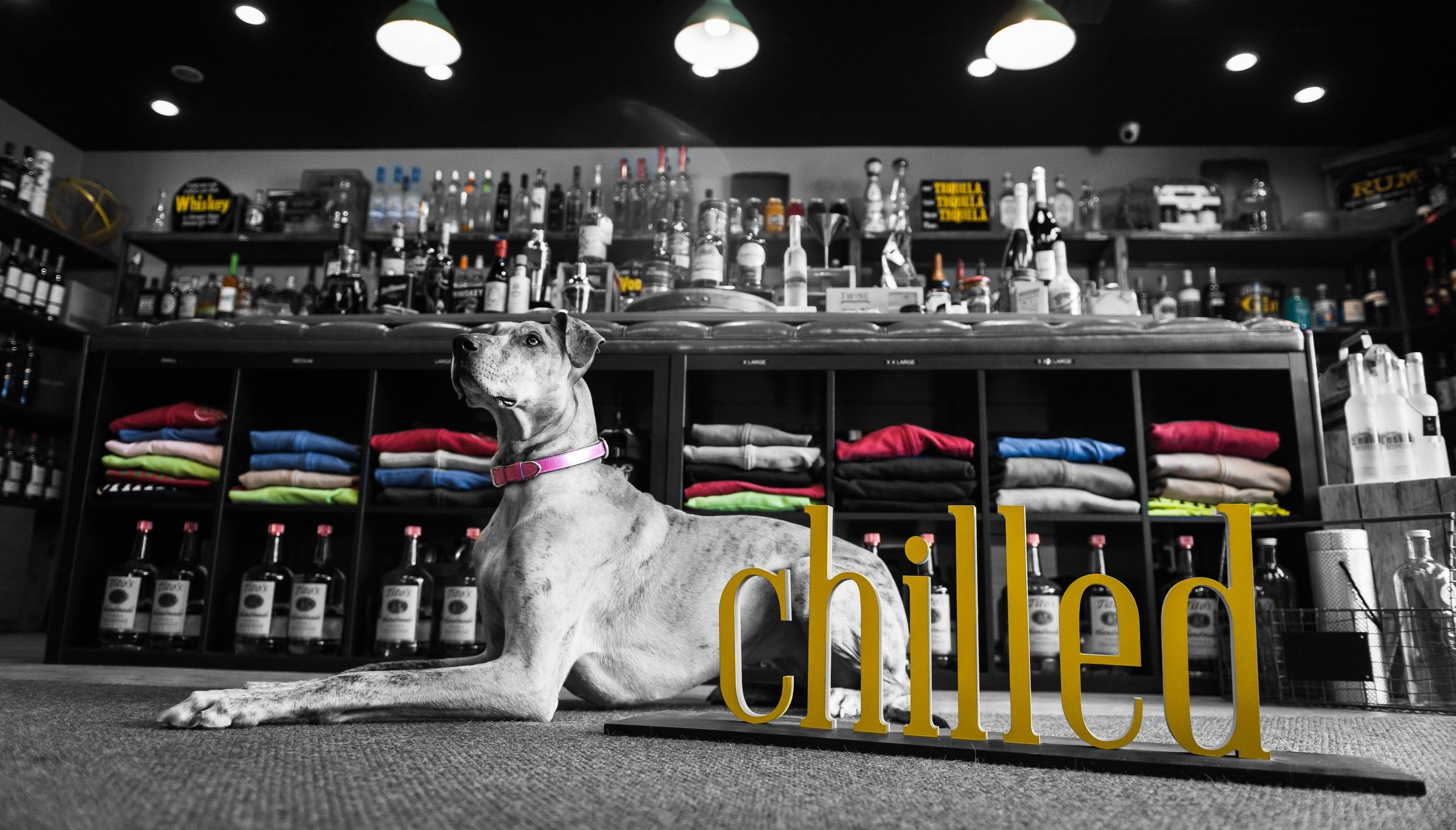 Nicks Chilled & Distilled Great Dane Daisy