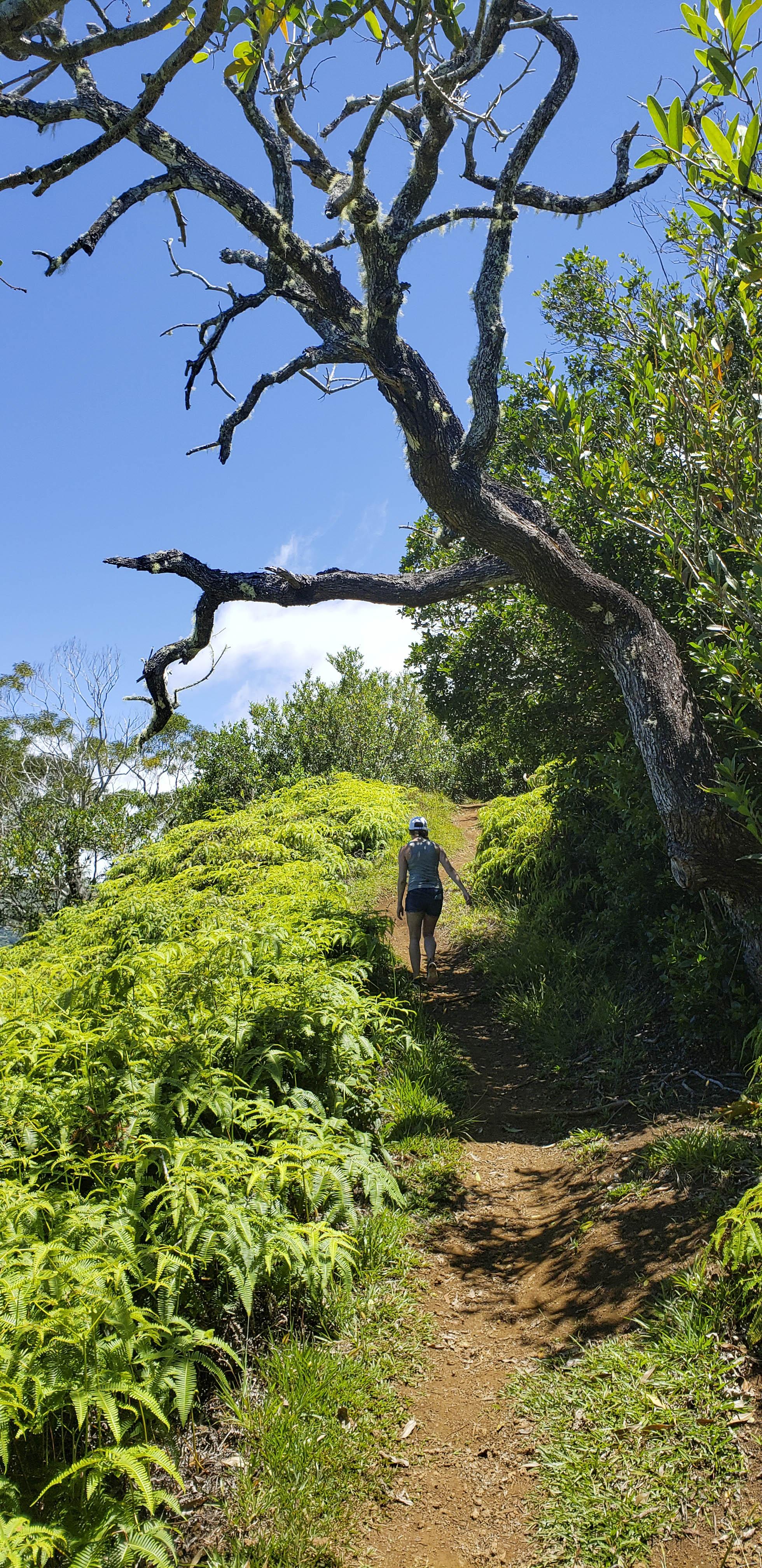 Jax hawaiiii.jpg