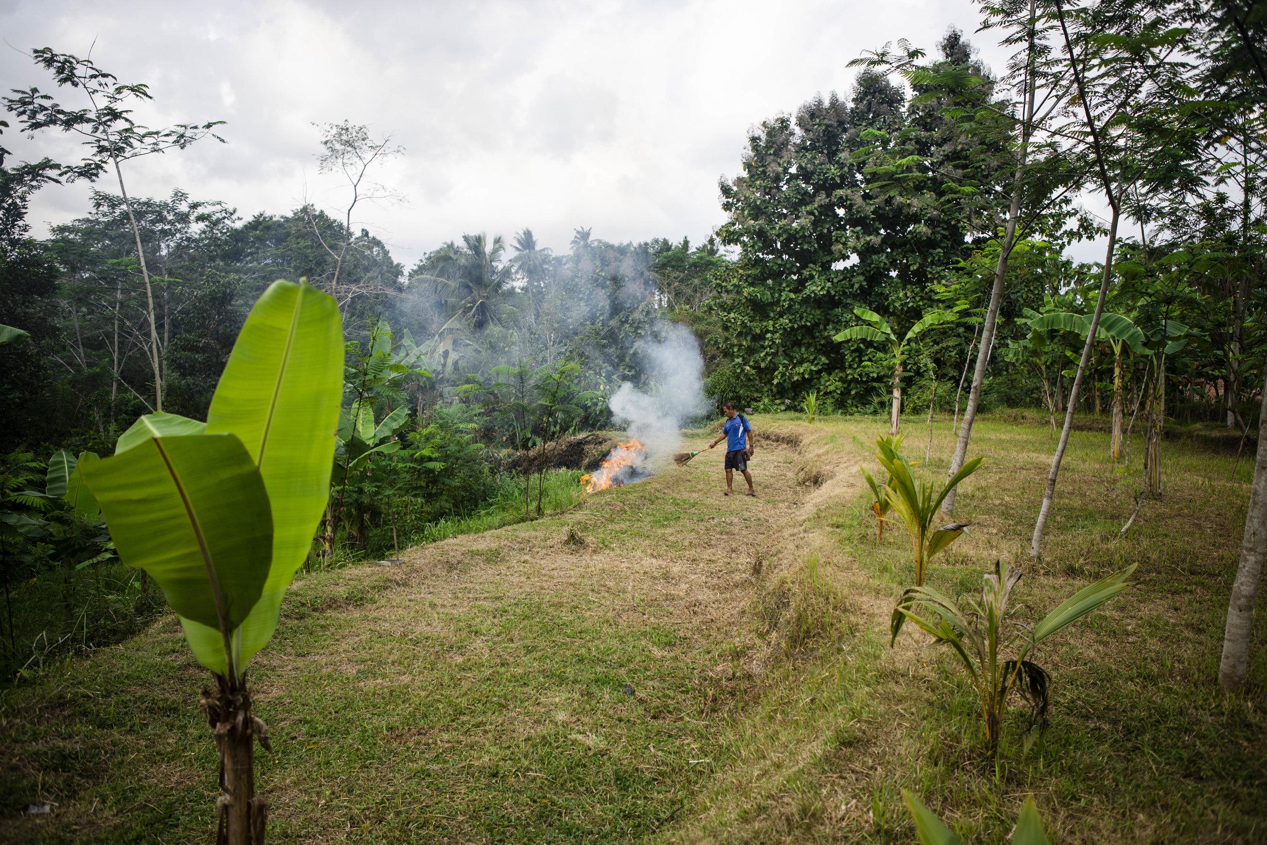 burning fields.jpg