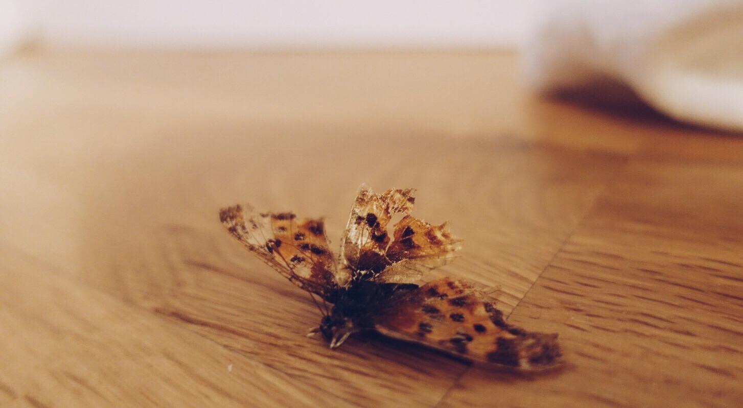 fw18-lepidoptera-e1534258663777.jpg