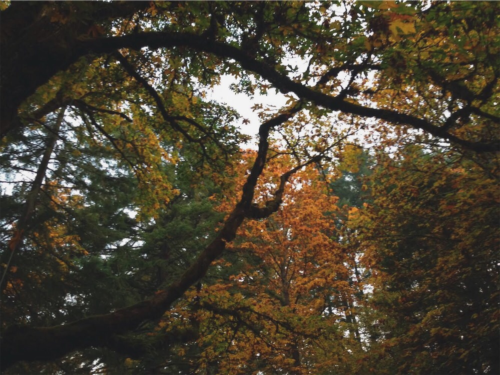 fw18-autumnmaple.jpg