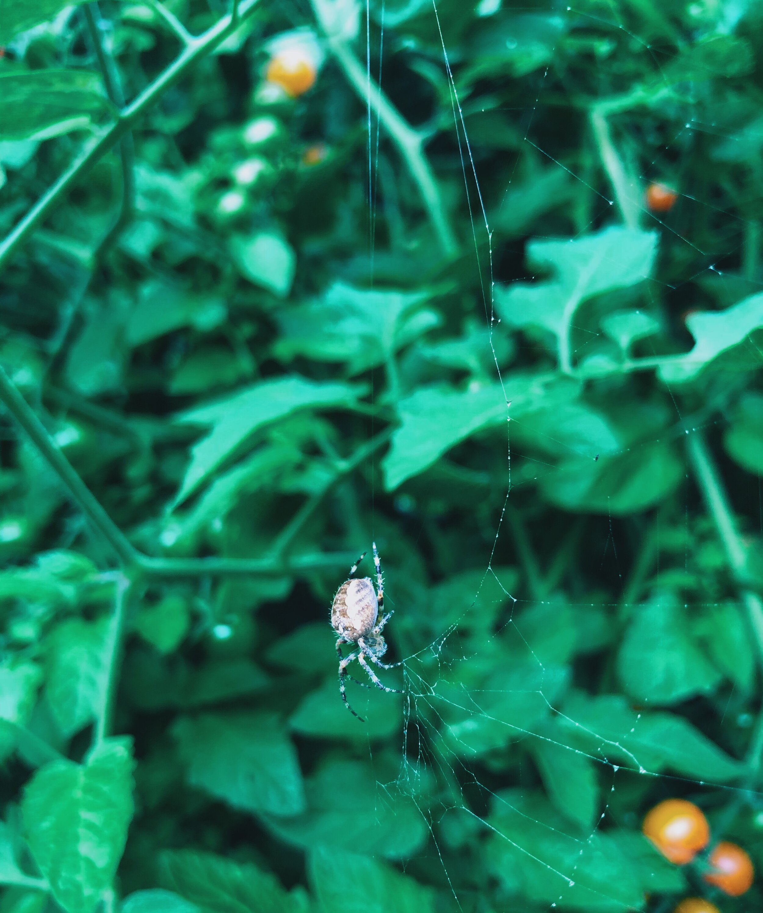 and big, fat garden spiders. (Big love to my hardworking organic pest control crew!)