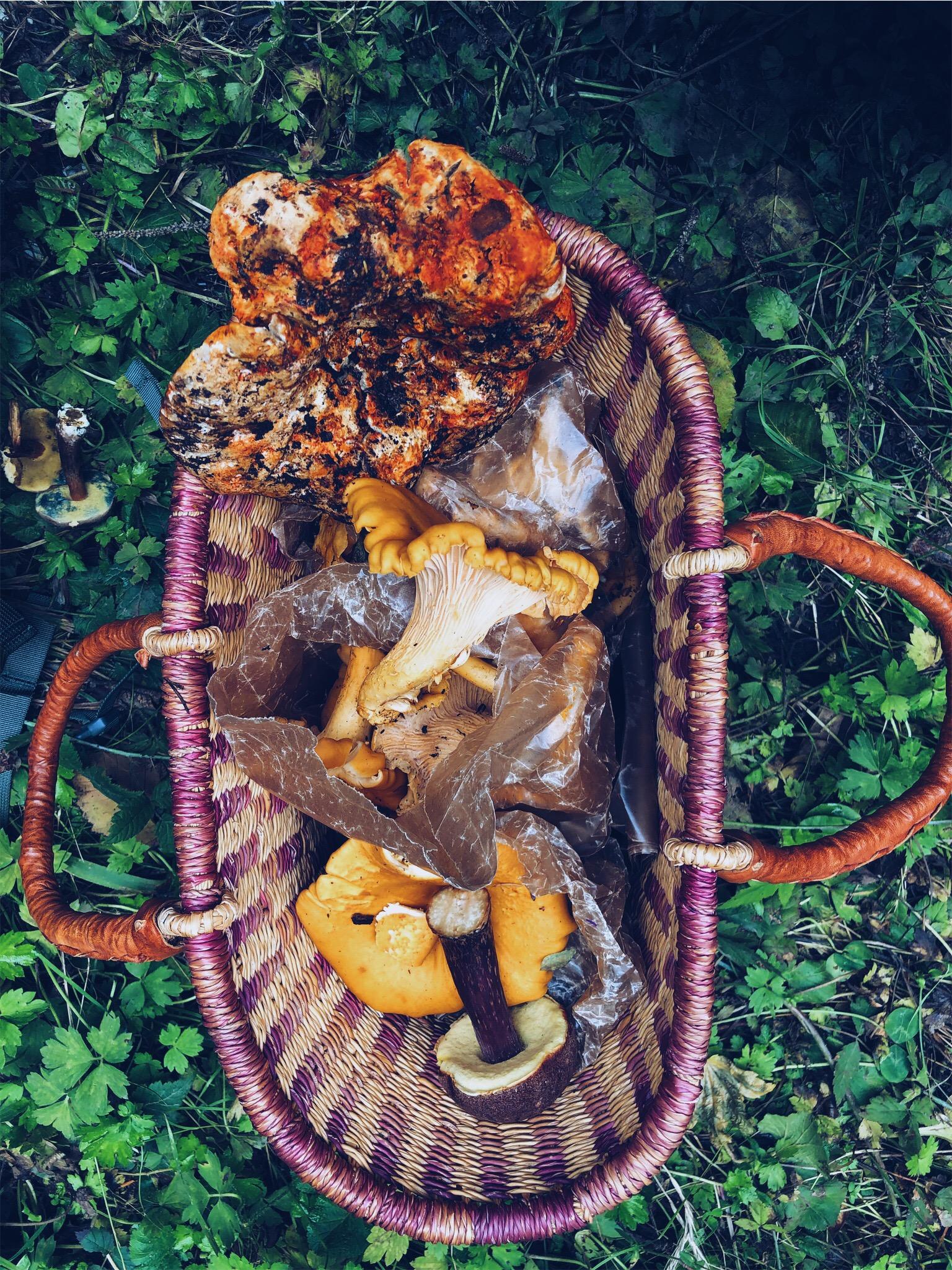 harvestmushroom.jpg