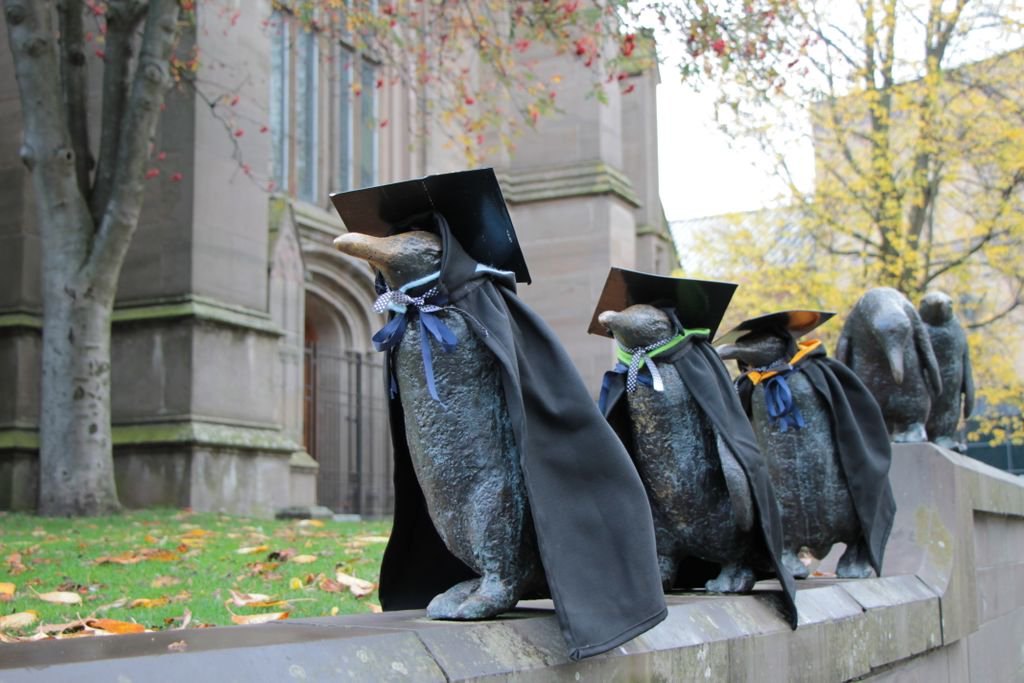 Dundee Penguins Ready for Graduation