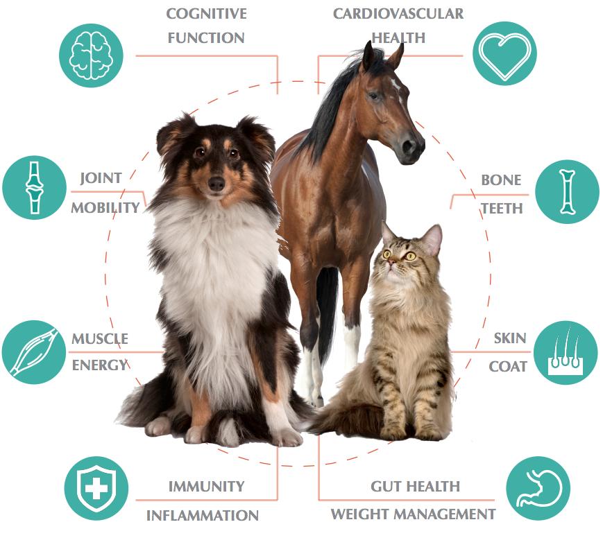 Animal Benefits