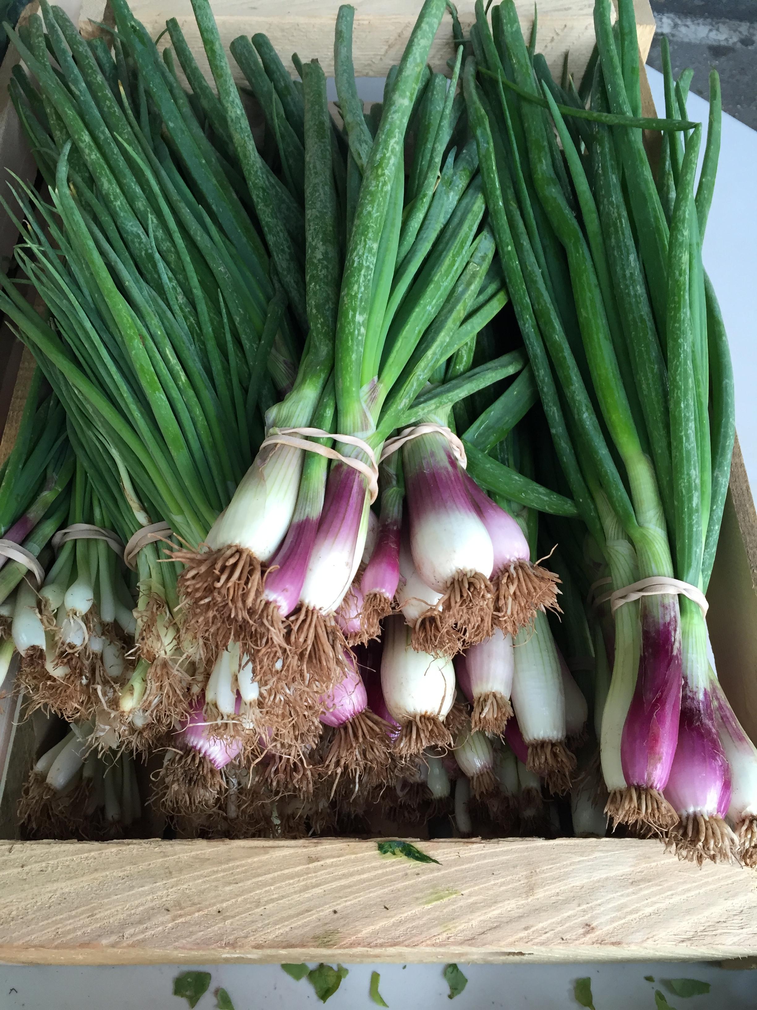 Green Onions at Farmers Market