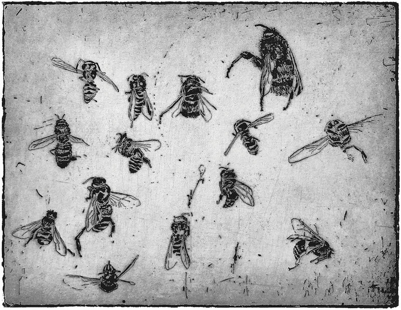 Bee and Bumblebee , etching