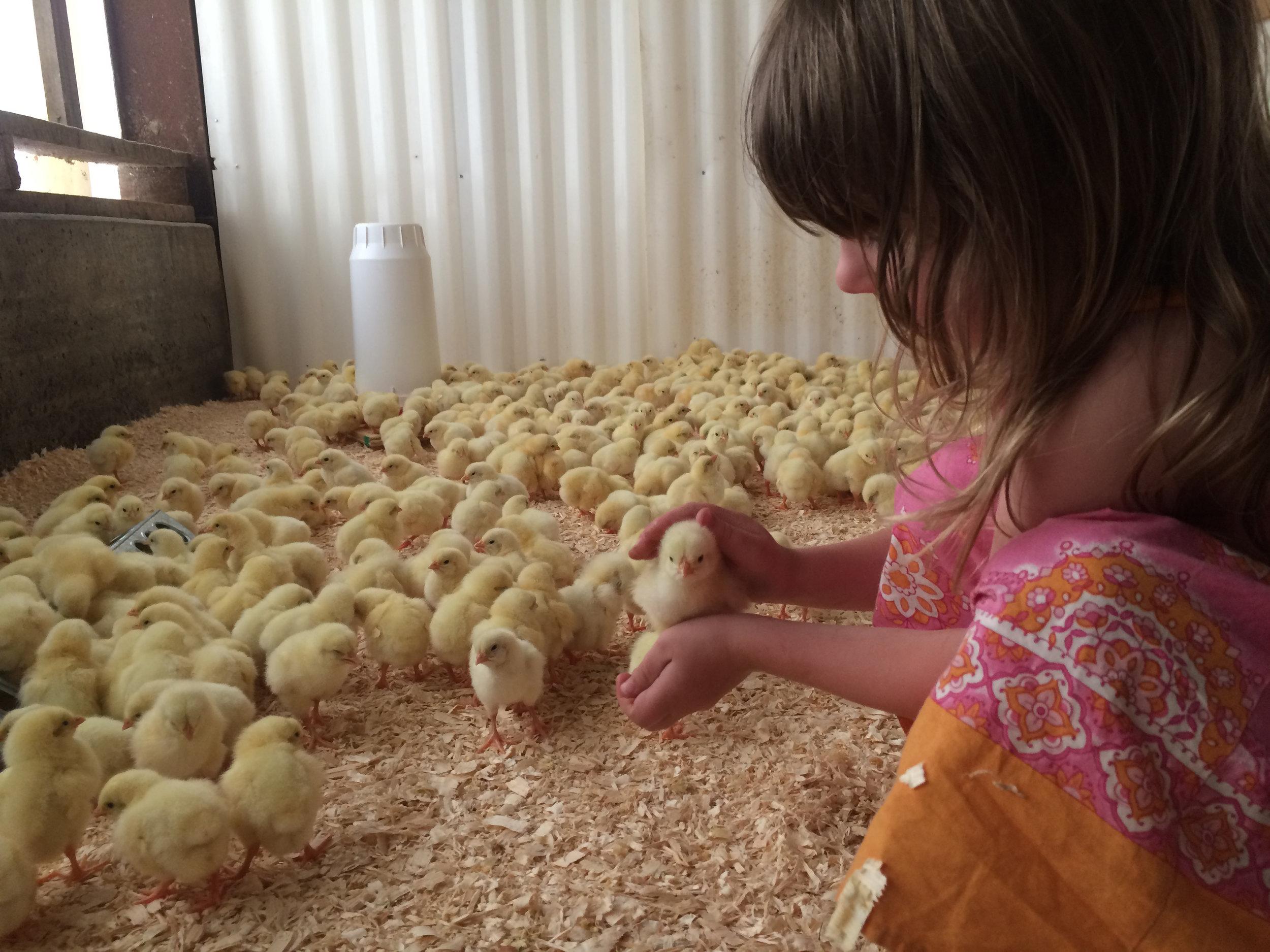 elsa-chicks.jpg
