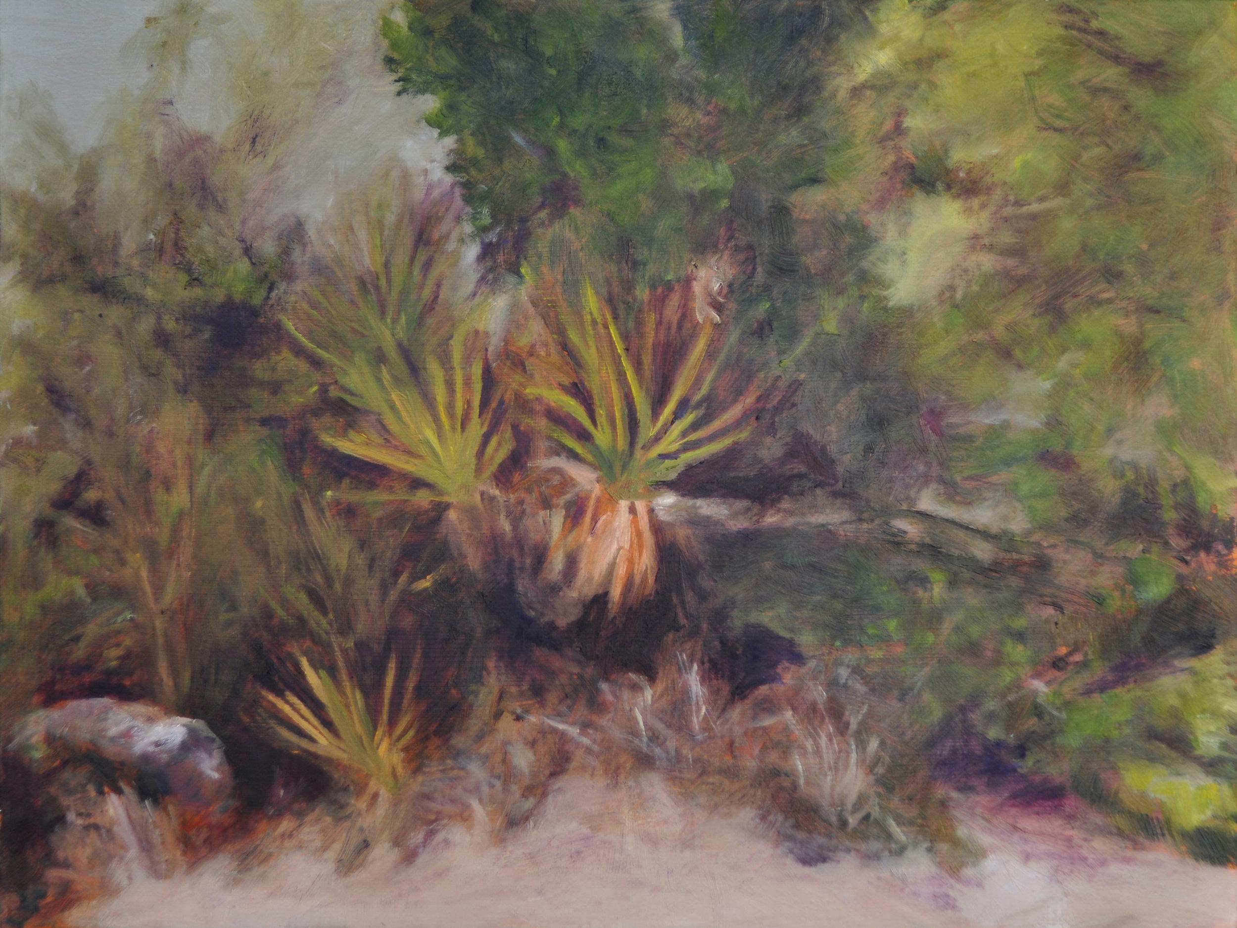 Yucca Nature