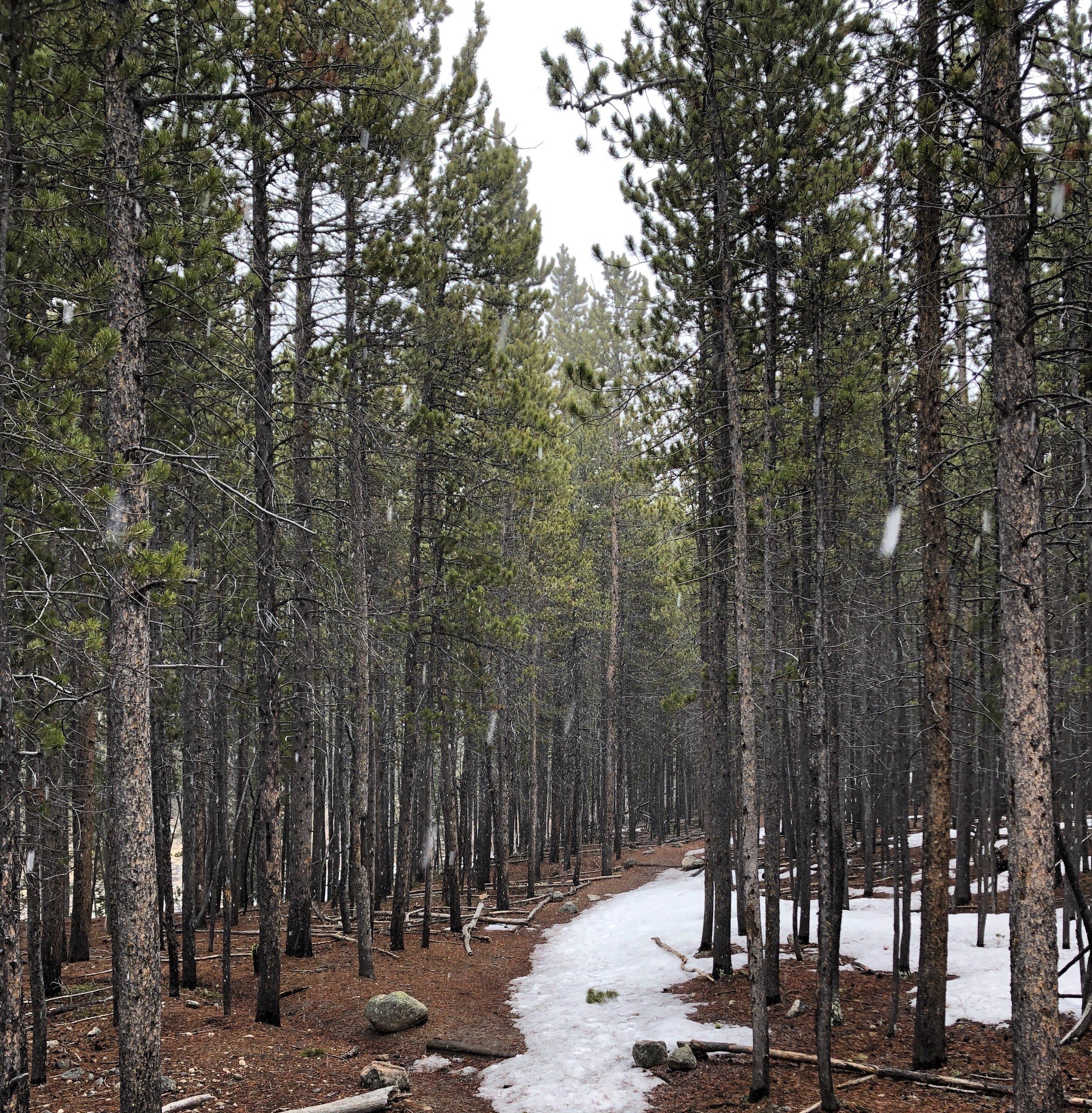 A Winter Path