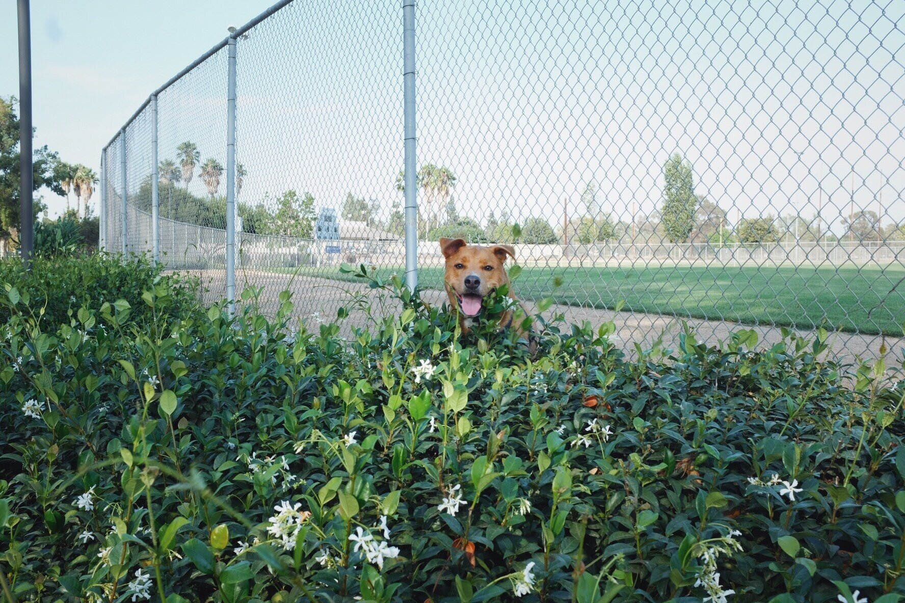 Bobby's Dog