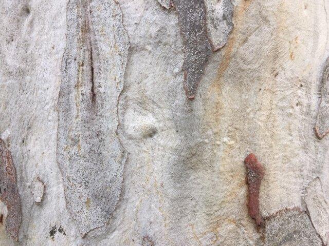 Bark, by Anahata Giri