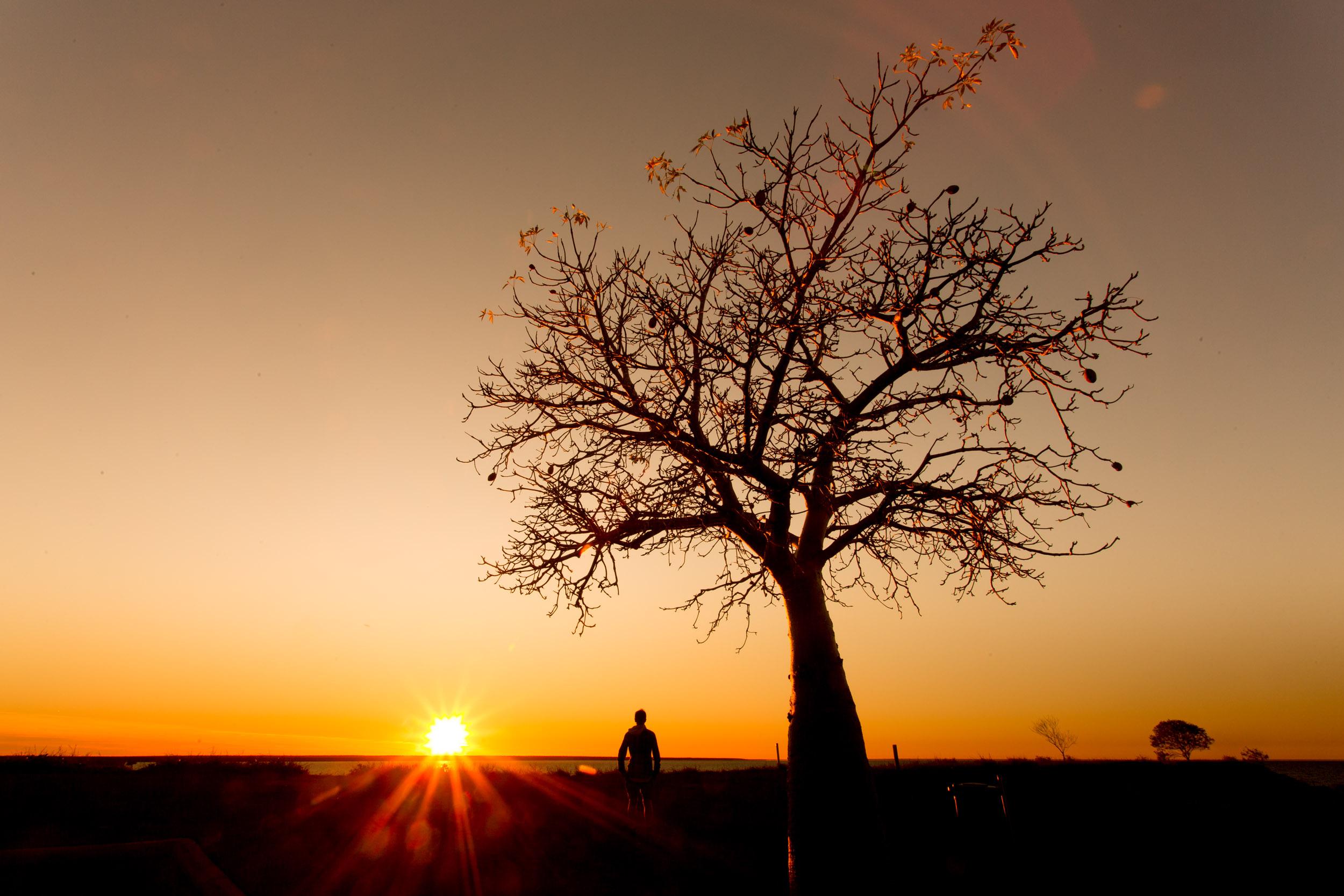 boab-tree-broome-western-australia.jpg