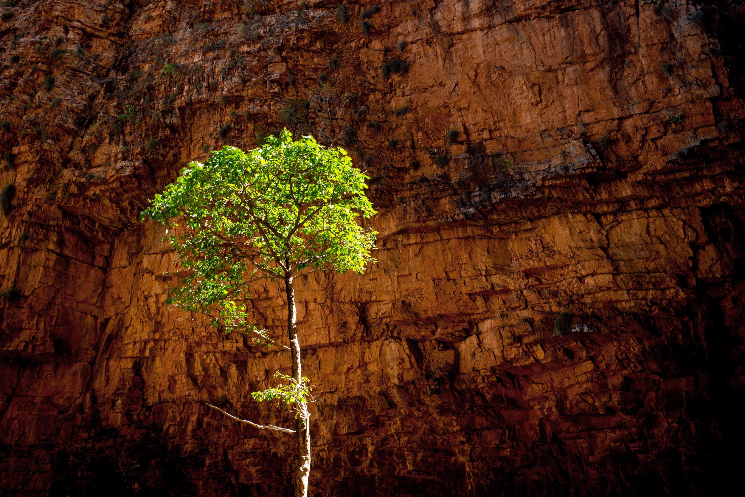 outback-western-australia-tree.jpg