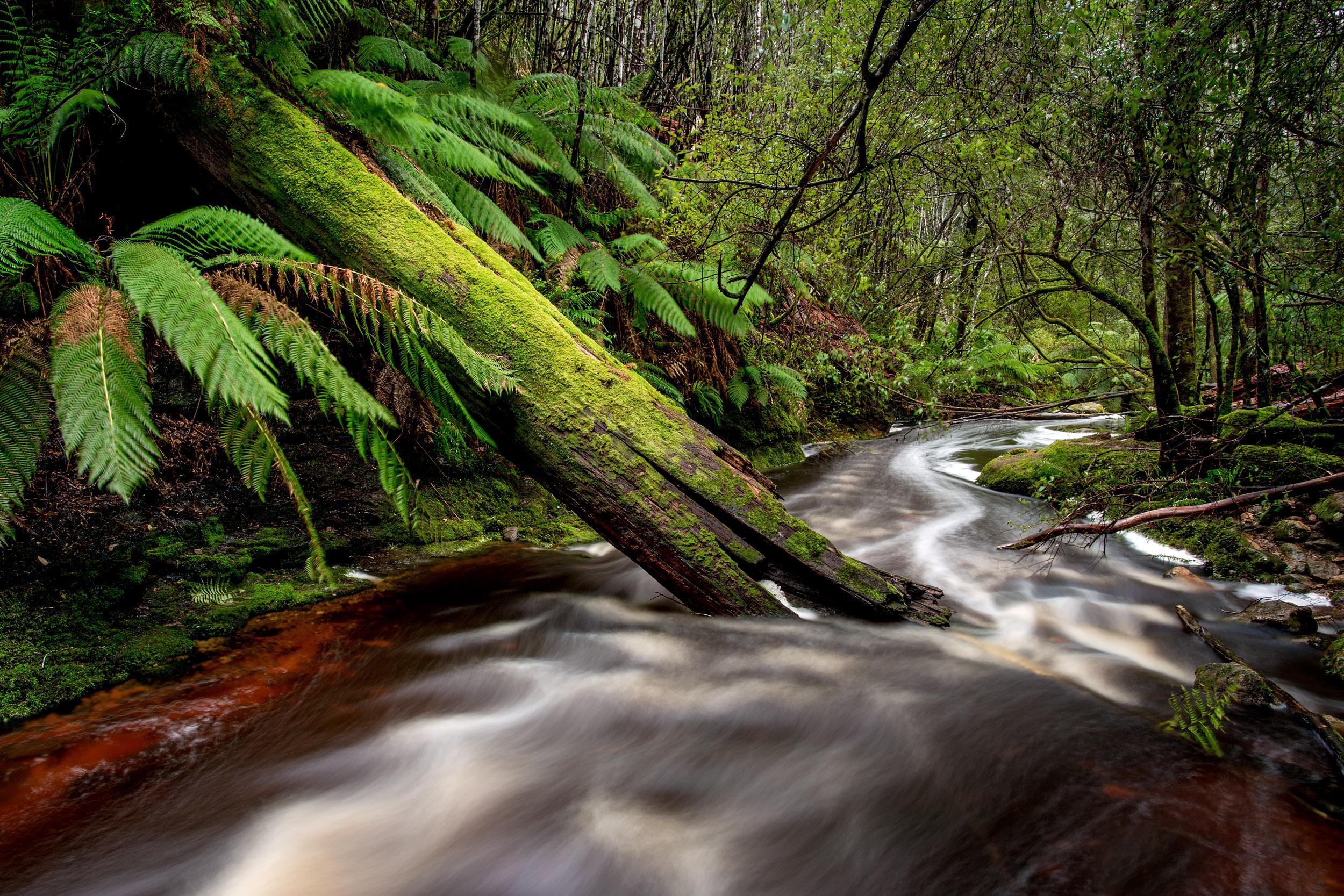 rainforest-tasmania.jpg