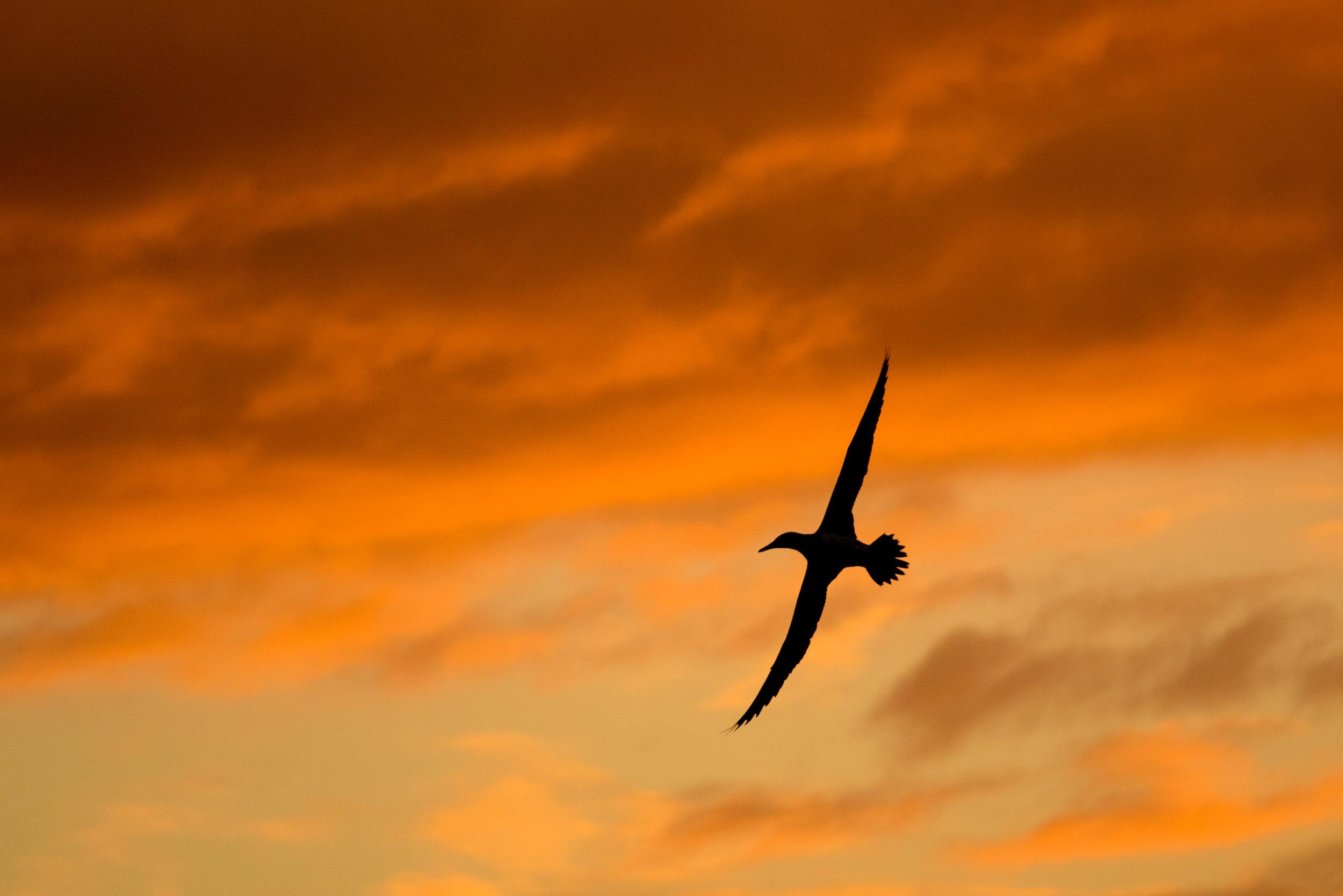sunset-flying-high.jpg
