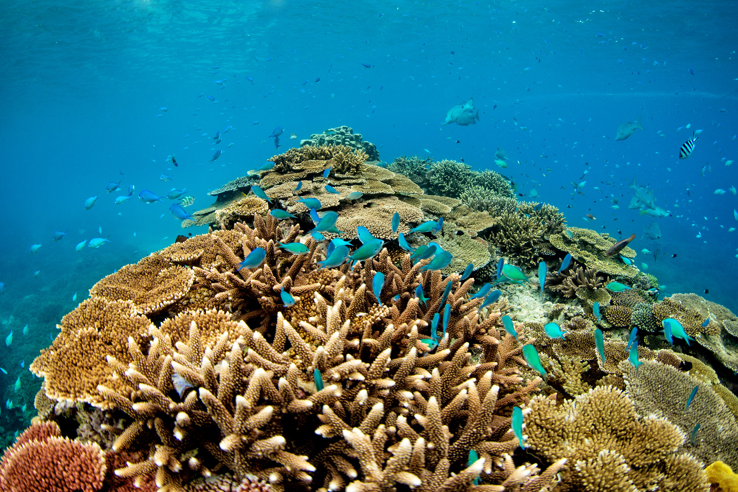 lady-elliot-island-great-barrier-reef-qld.jpg