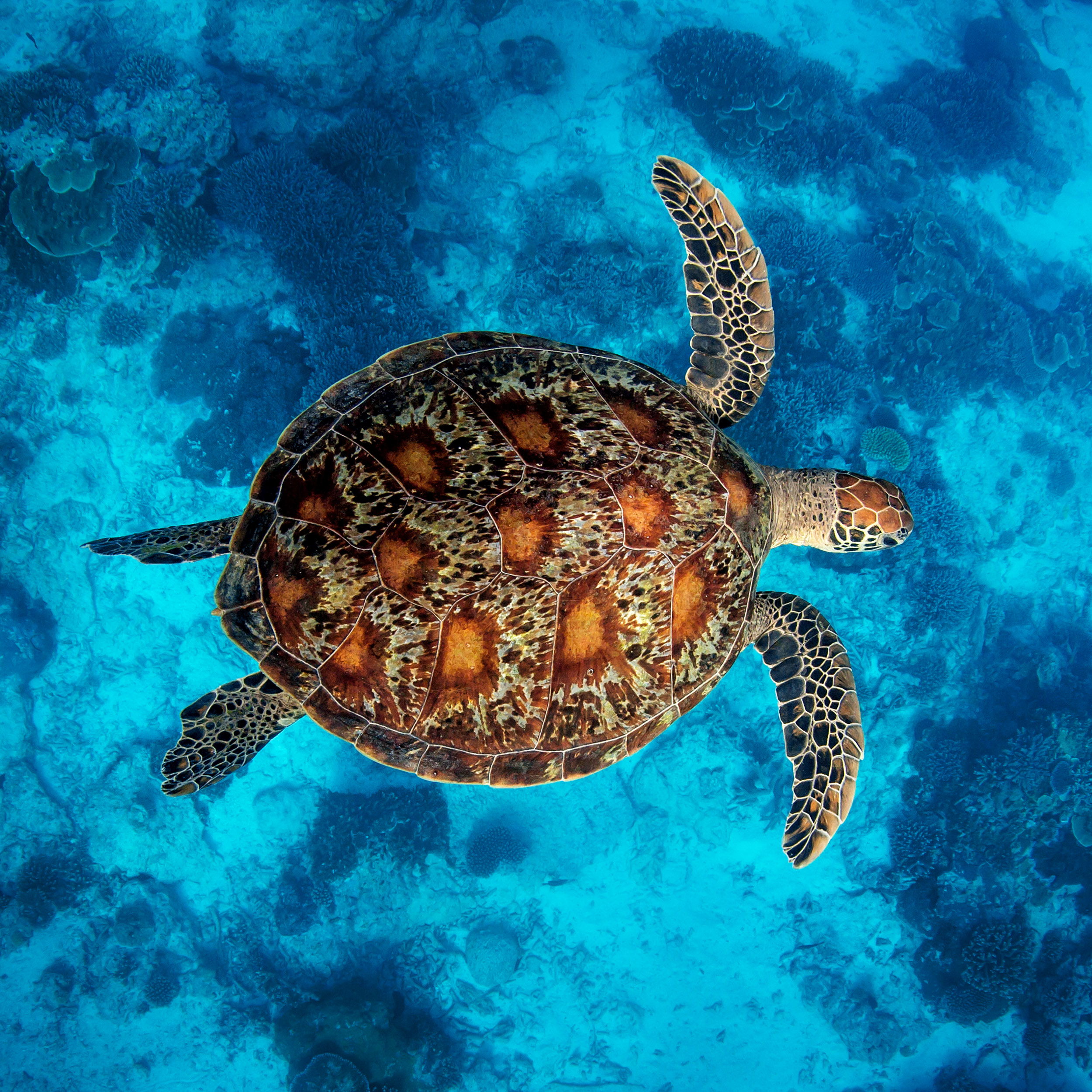 lady-elliot-island-turtle.jpg