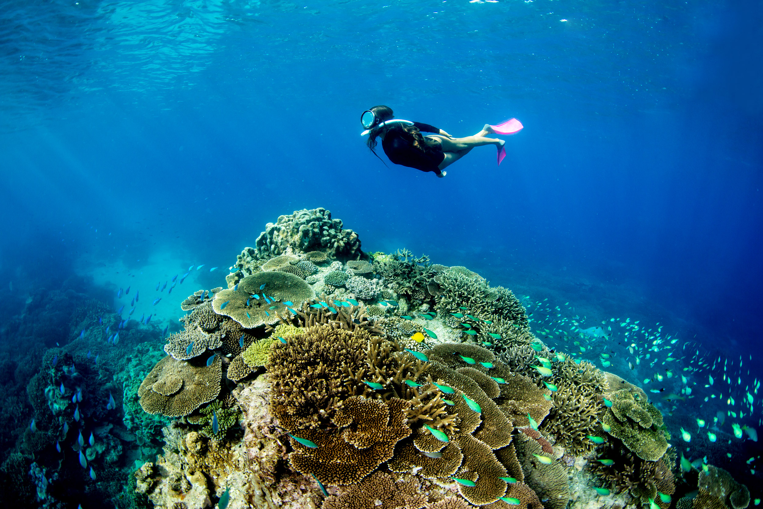 snorkelling-lady-elliot-island-reef.jpg
