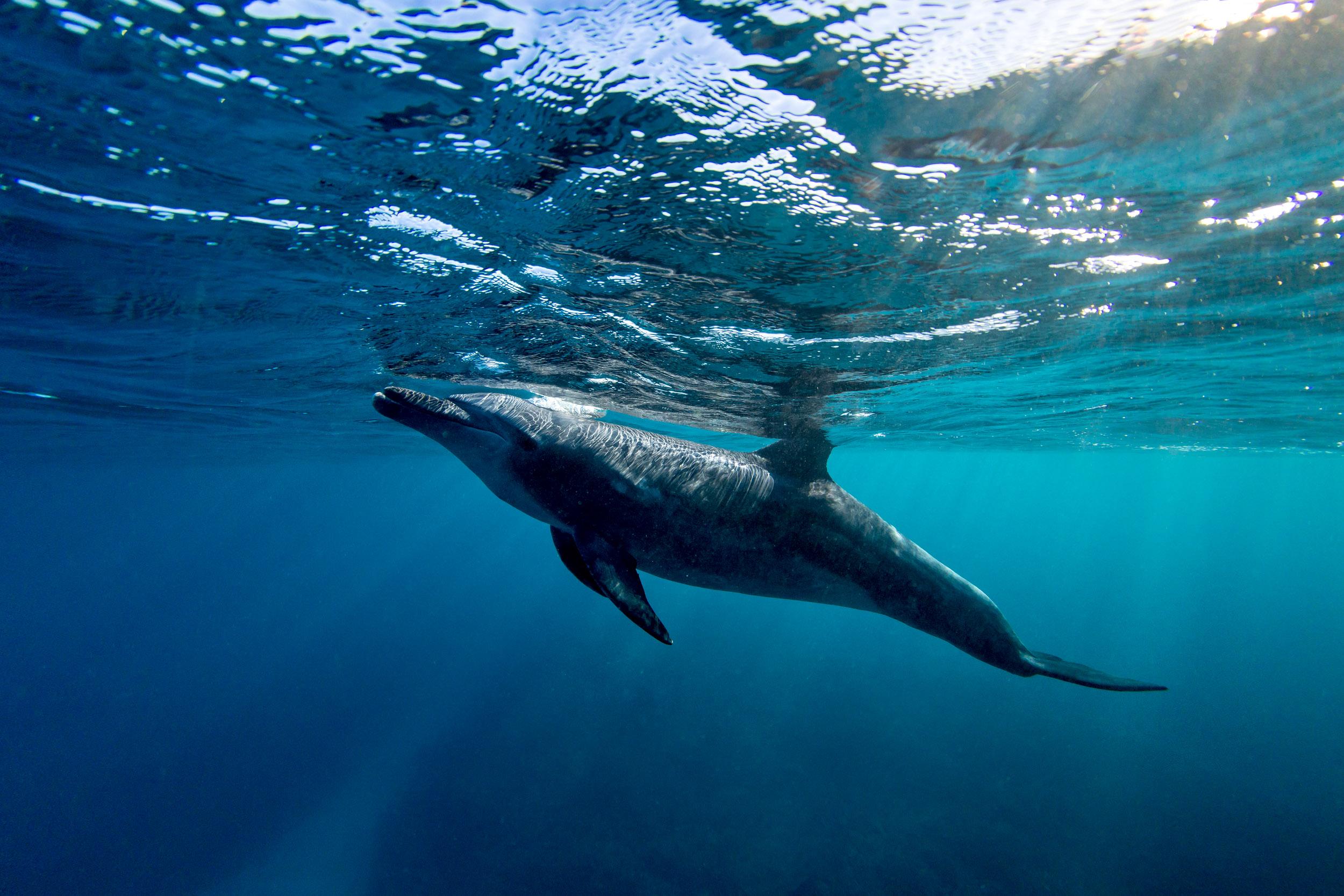 dolphins-lady-elliot-island.jpg