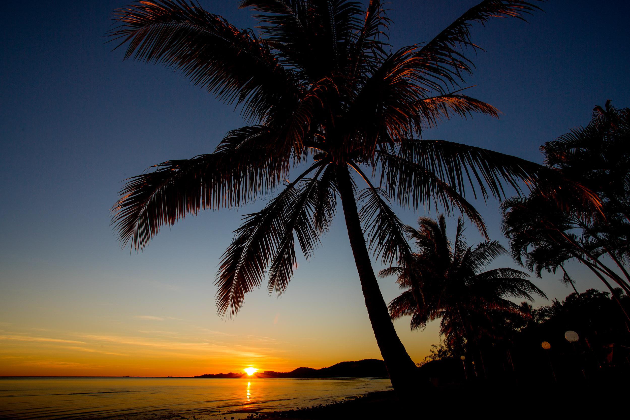 bowen-palm-trees-sunrise.jpg