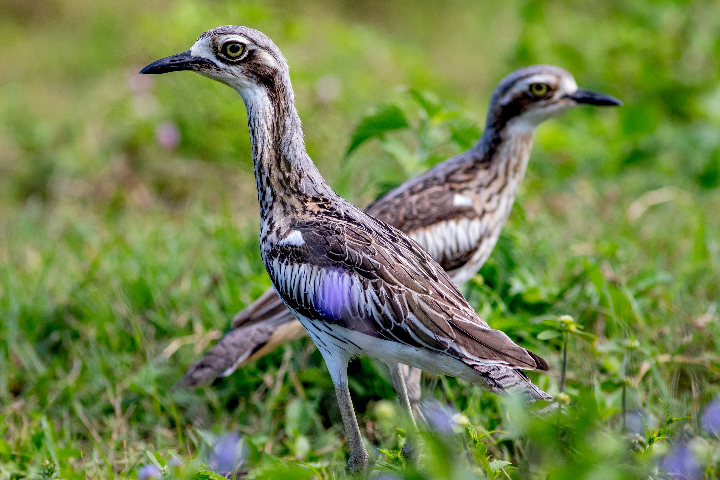 bird-life-northern-queensland.jpg