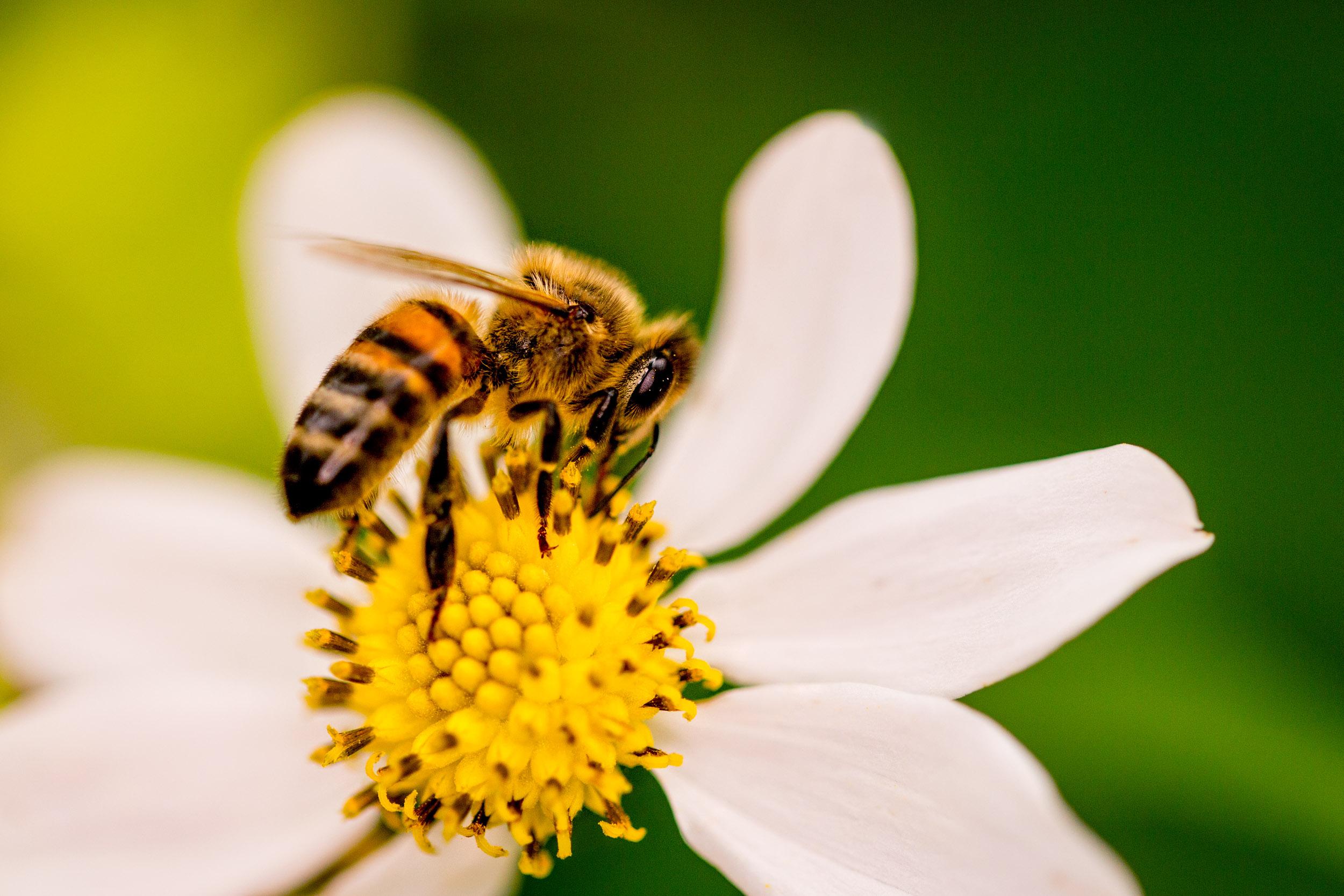 bee-macro-photography.jpg