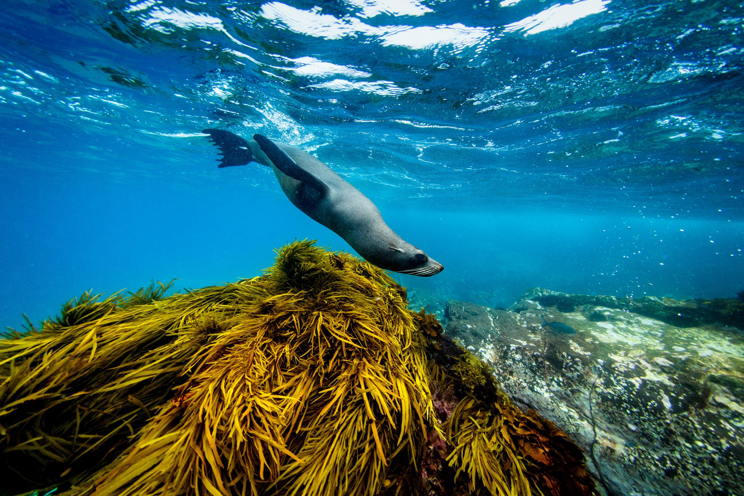 seals-montague-island-narooma-nsw.jpg