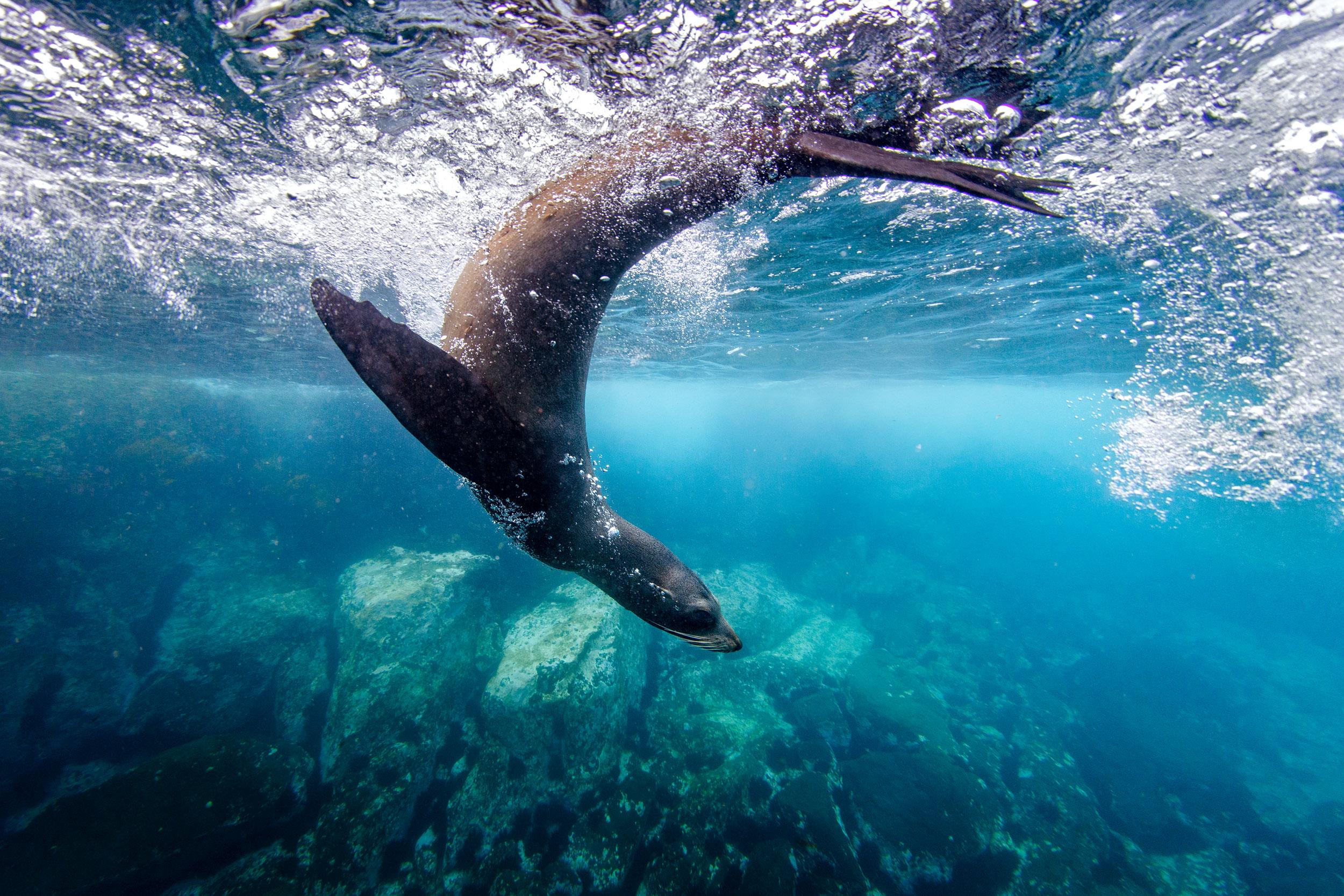 seals-narooma-watershot-swimming-nsw.jpg