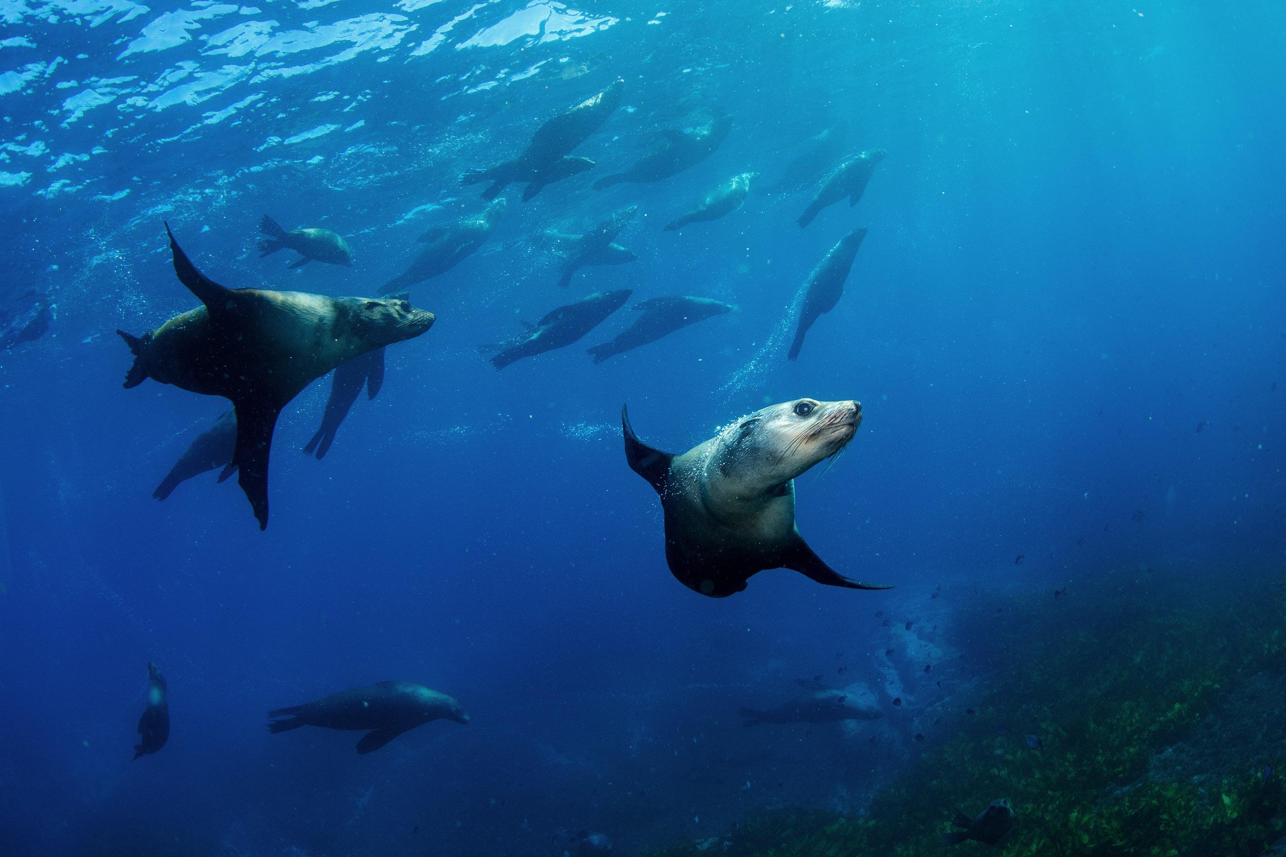 seal-colony-narooma-montague-island-south-coast.jpg