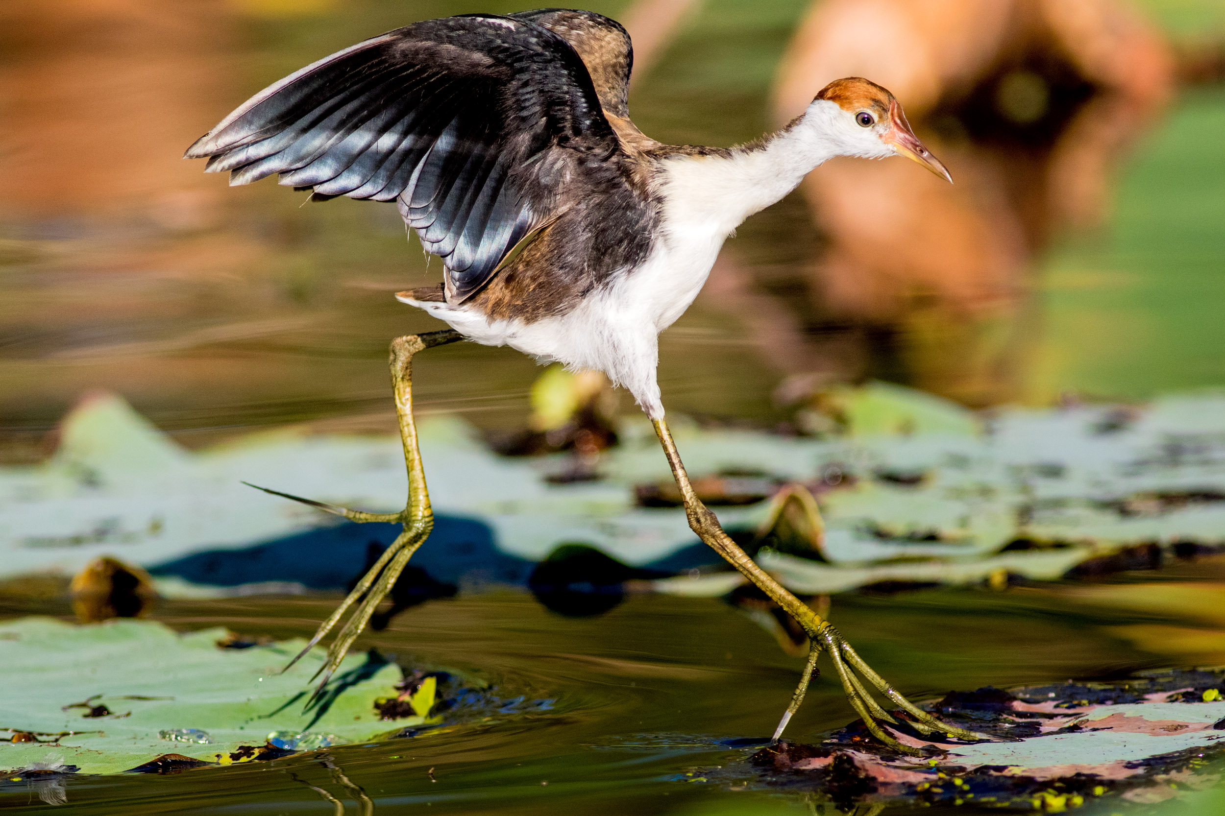 bird-life-kakadu-northern-territory.jpg