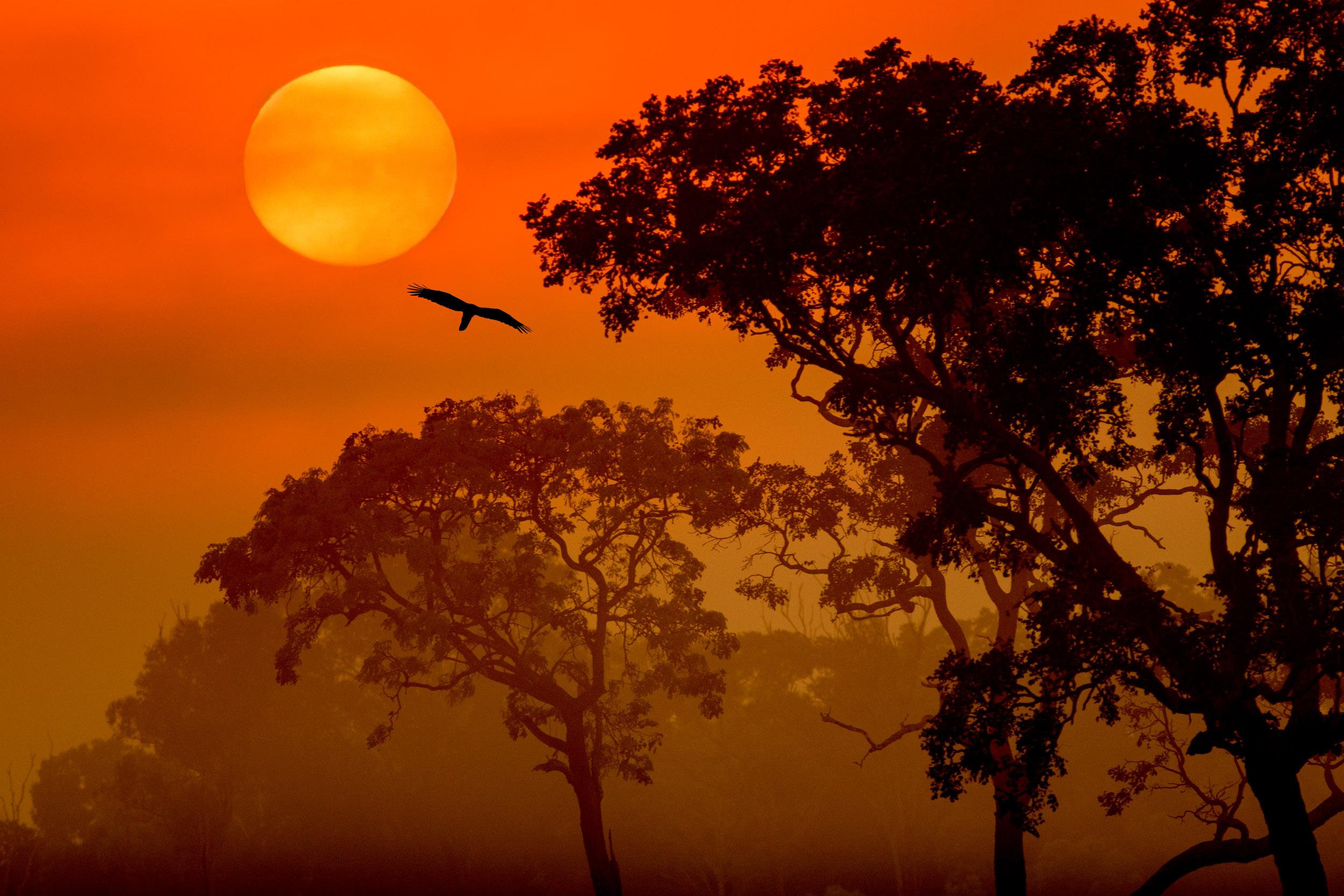 fogg-dam-sunrise-northern-territory.jpg