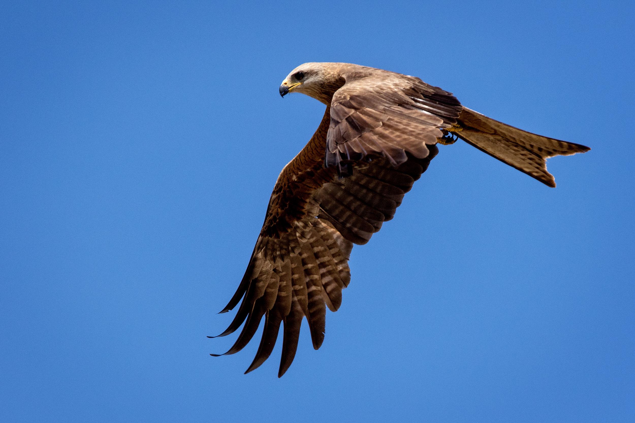 northern-territory-bird-life-photography.jpg