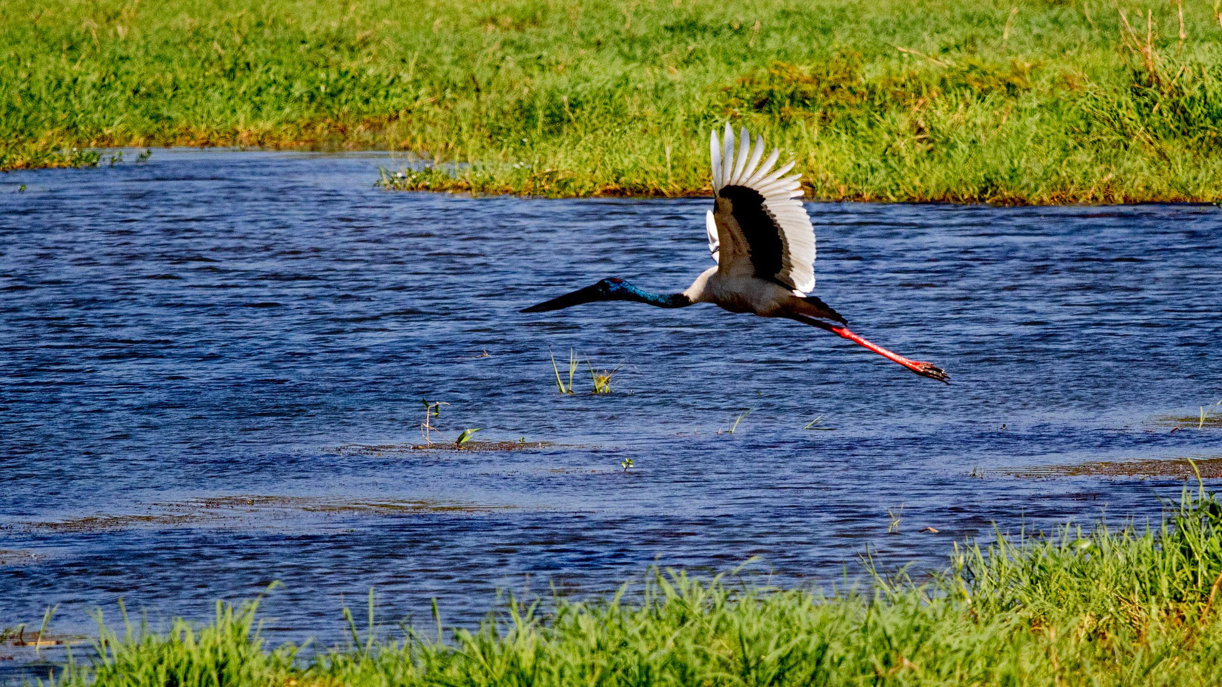 jabiru-wetlands-NT.jpg