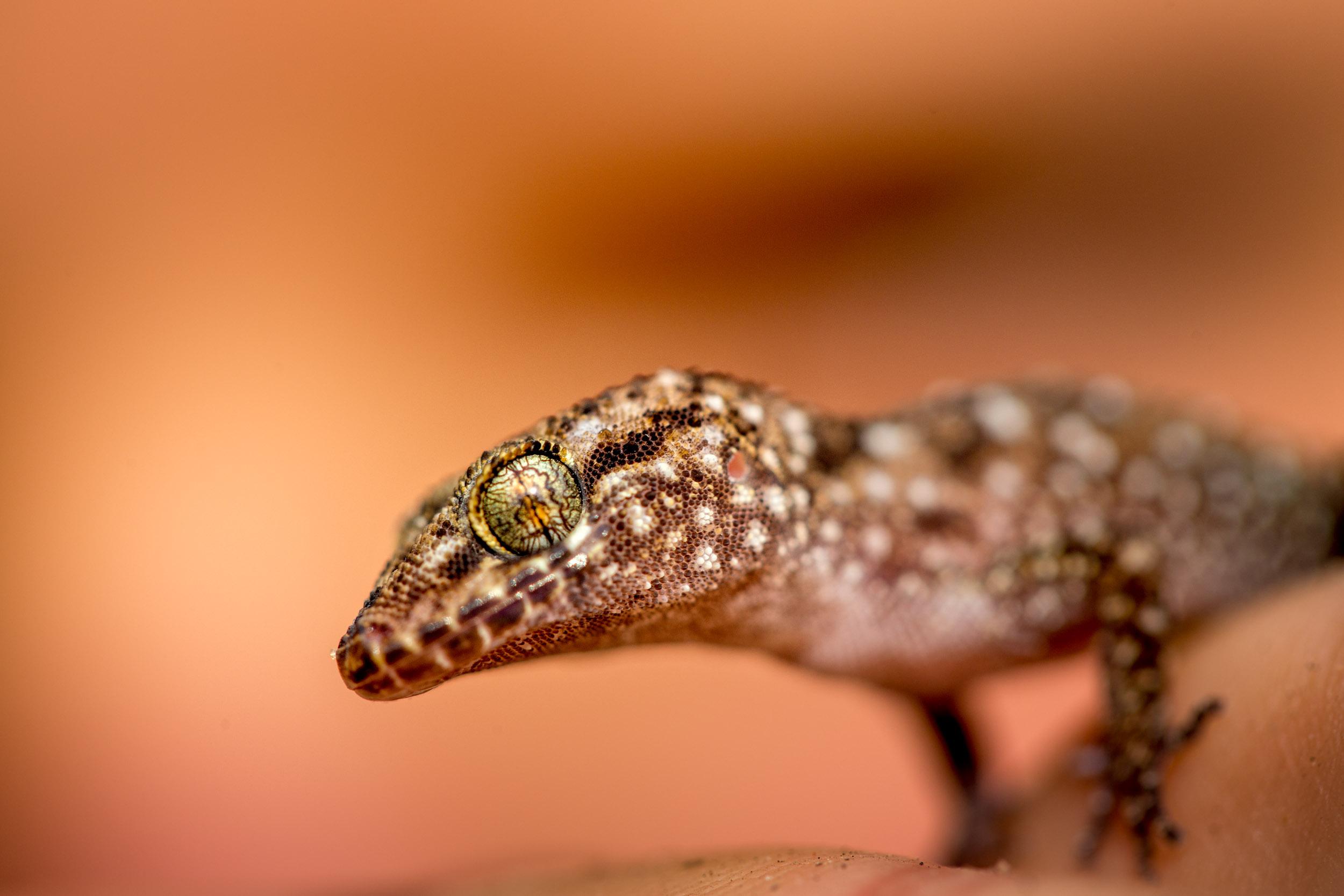 reptiles-northern-territory.jpg