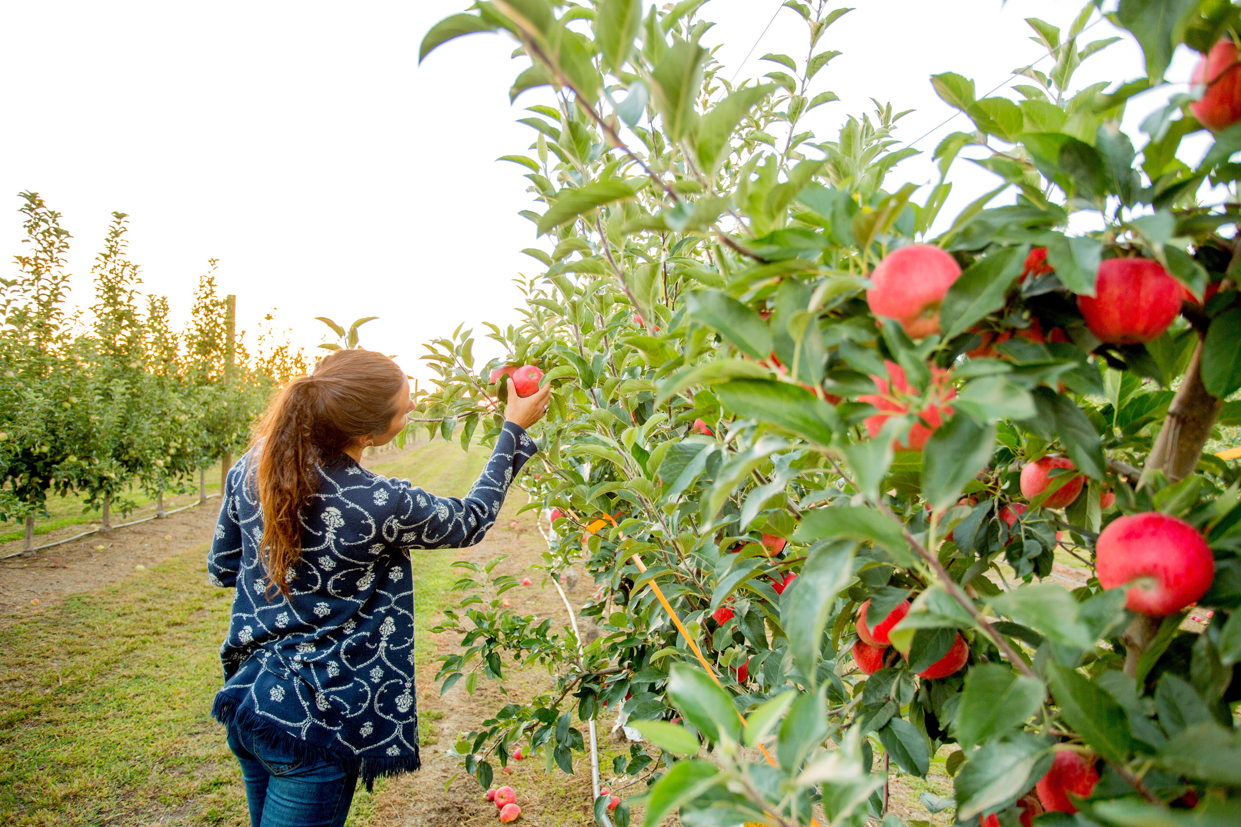 apple-picking-health-coach-personal-brand-photography.jpg