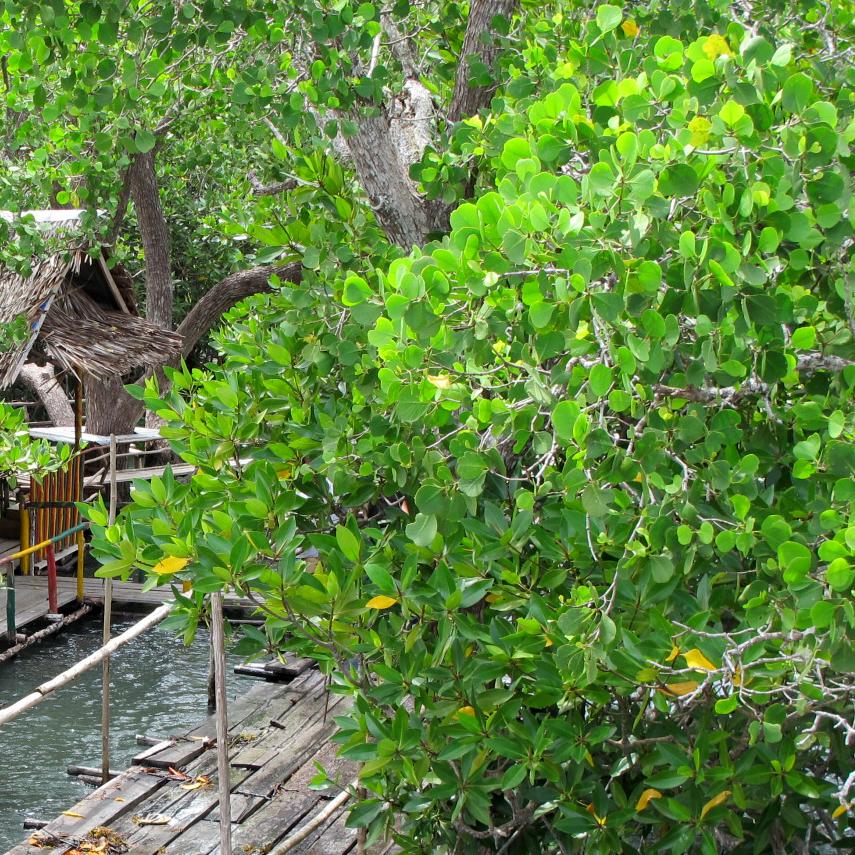 Kuala Granite Mangrove Forest -