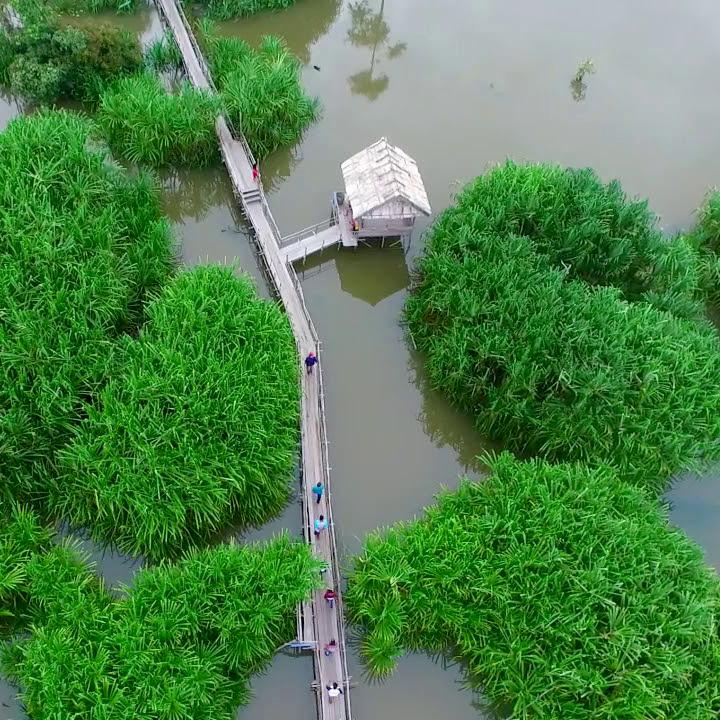 Tebat Rasau Cenozoic Swamp -