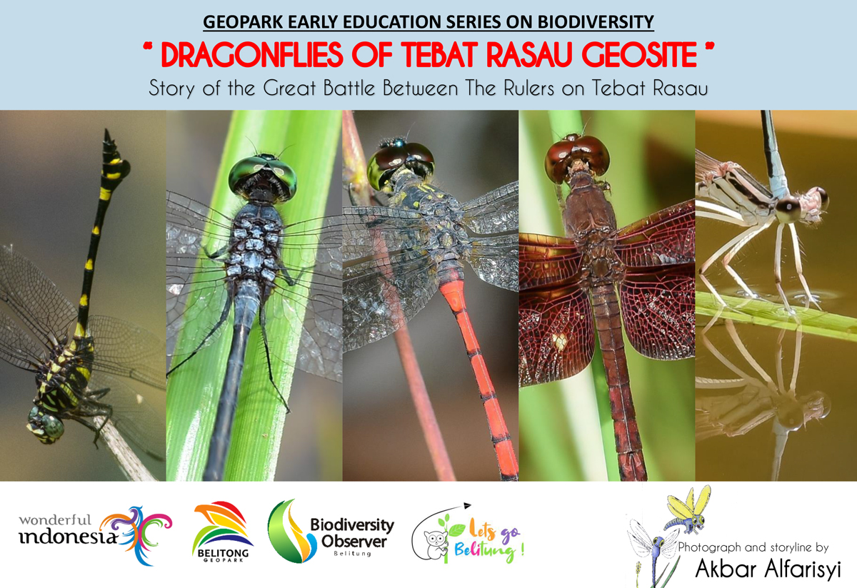Dragonflies of Tebat Rasau, Story of Great Battles between Rulers of Tebat Rasau