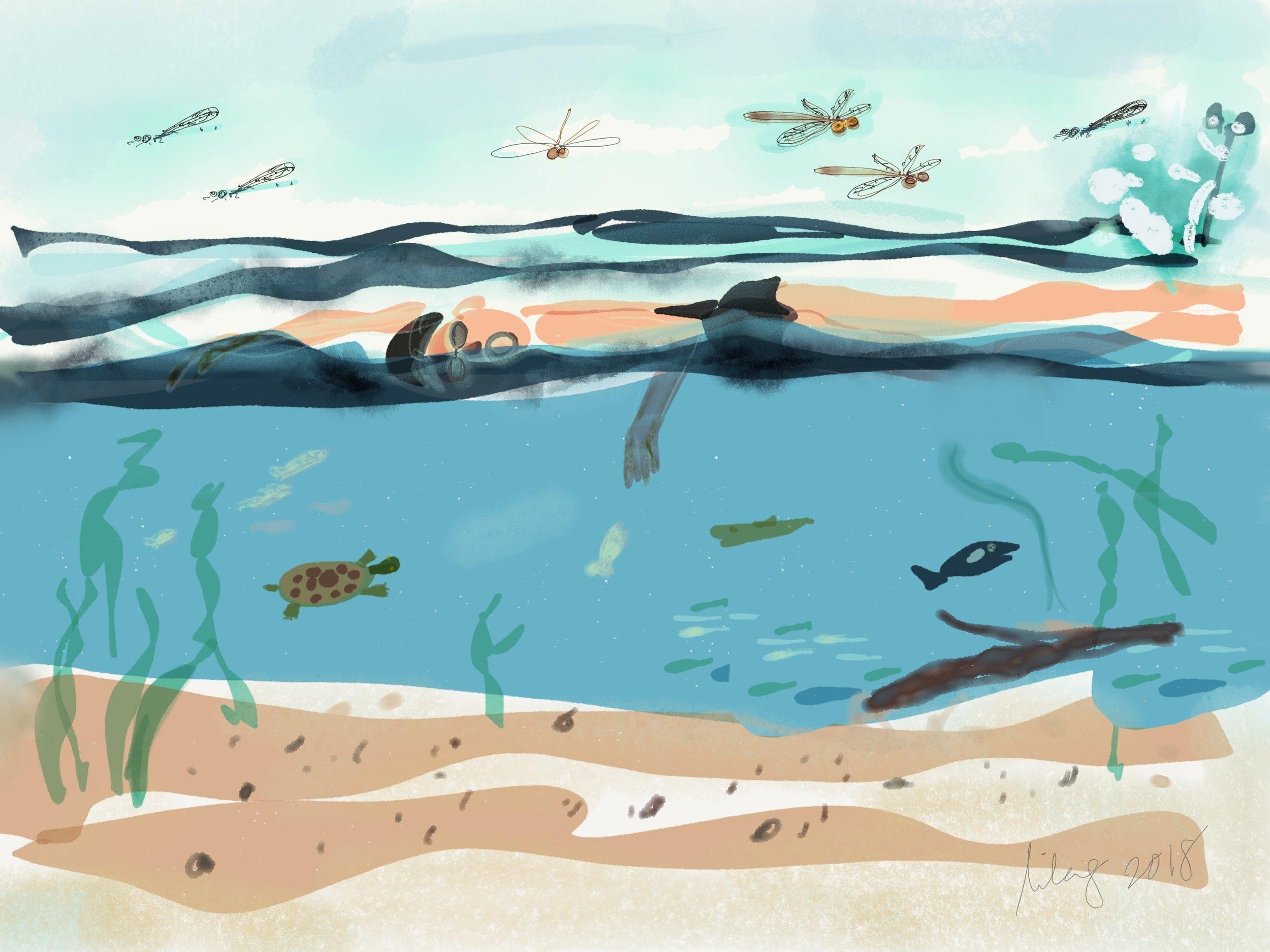 2018_august_swimmingwthedragonflies-nomi.jpg